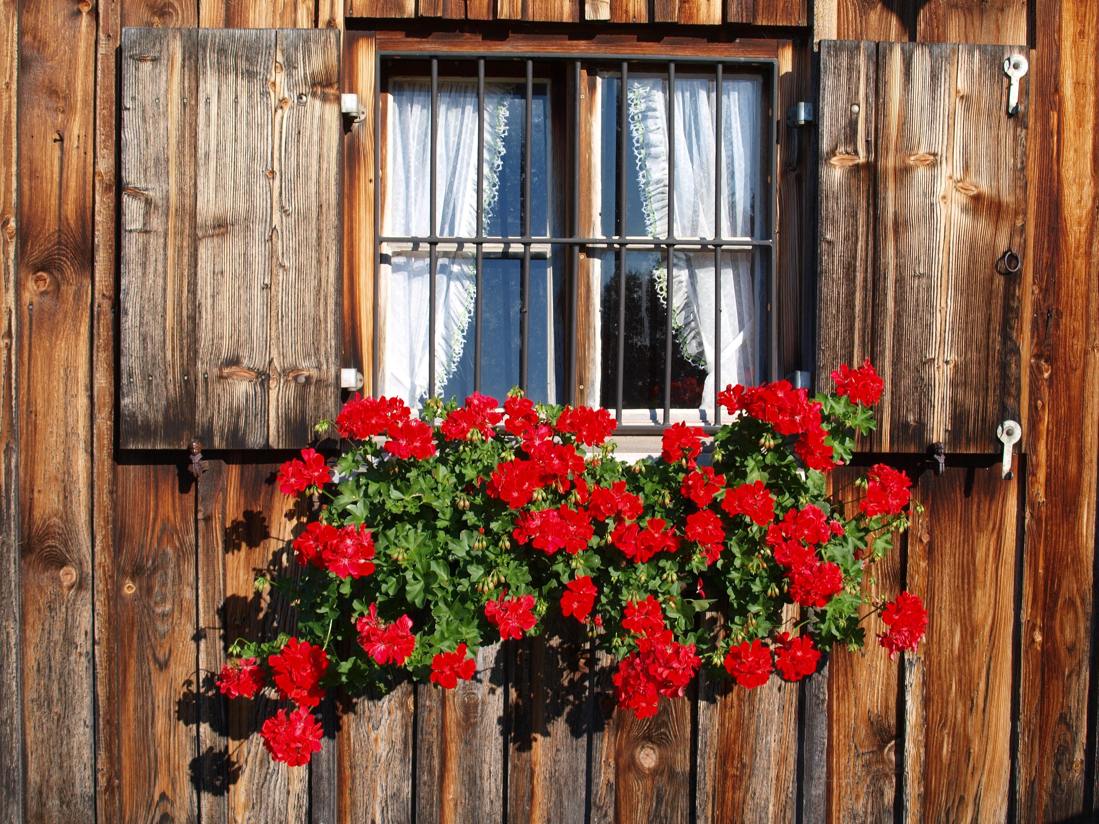 Kostenlose Foto Pflanze Holz Alt Rustikal Rot Hutte