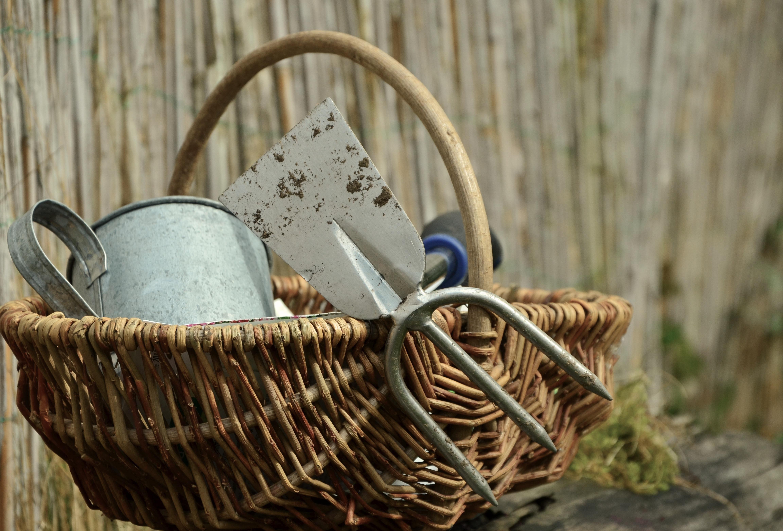 Free Images : plant, wood, basket, still life, seeds, sow, gardening ...