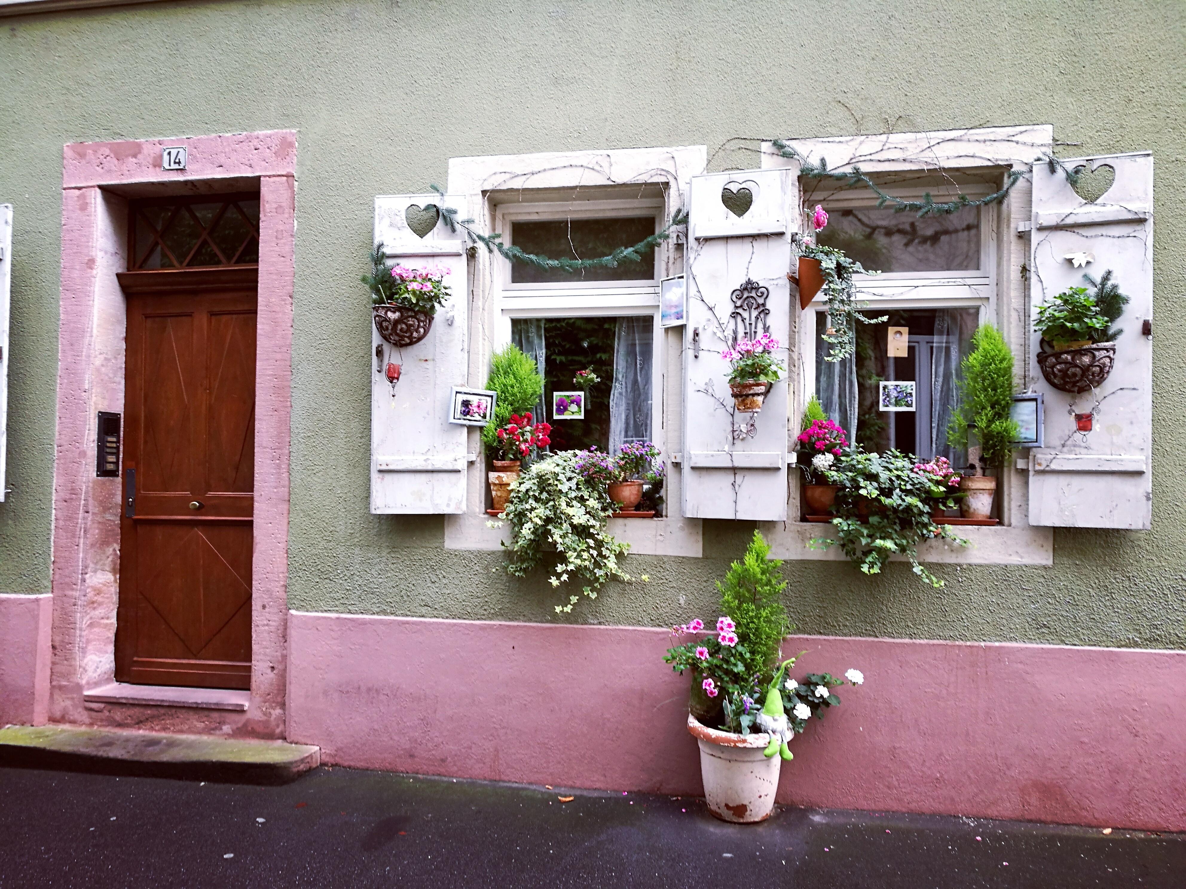 Fotos gratis : planta, madera, niña, dulce, casa, flor, ventana ...
