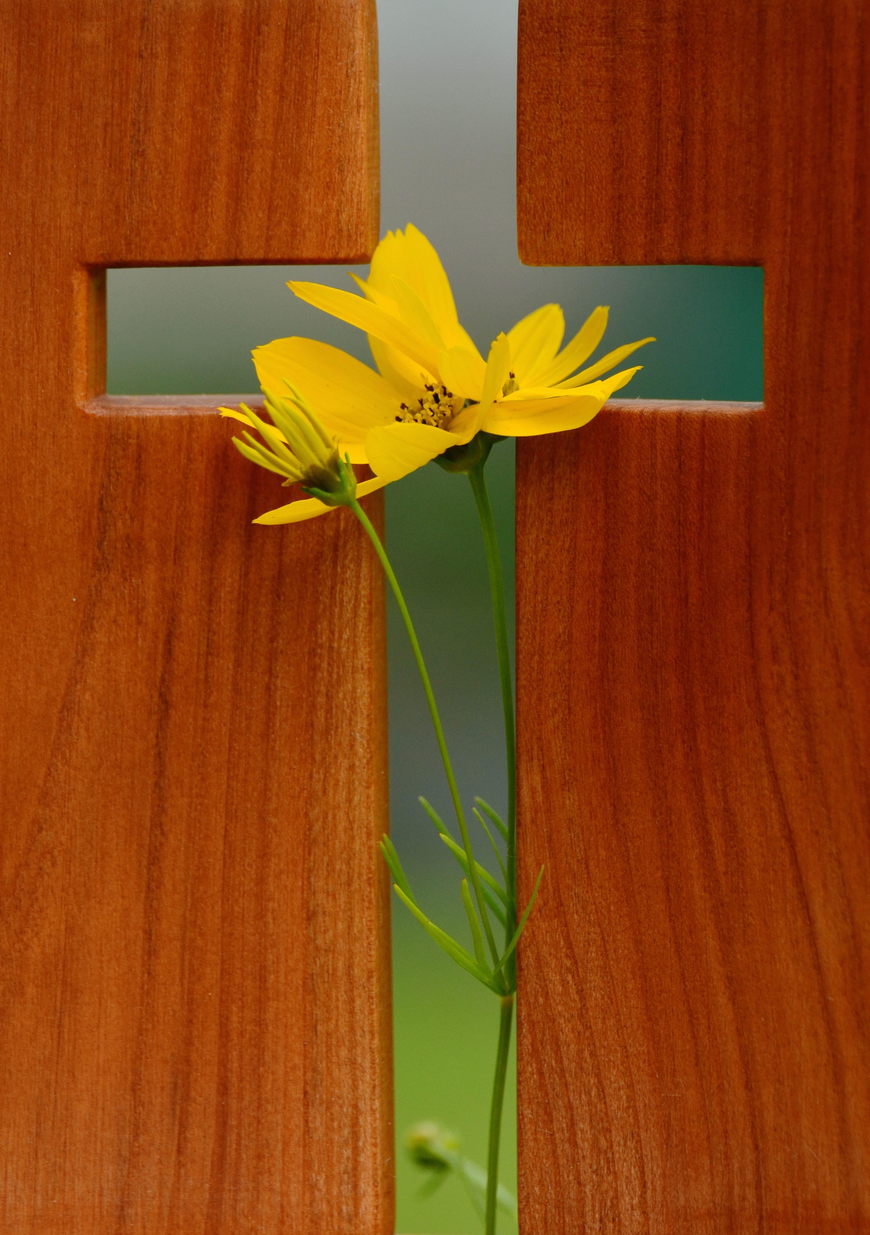 Fotos gratis : hoja, flor, pétalo, vivir, verde, símbolo, religión ...