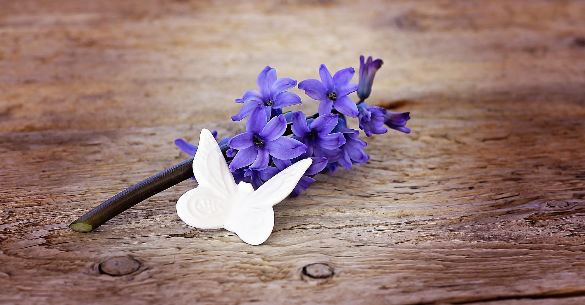 Free Images : wood, leaf, purple, petal, flora, blue flower, flowers ...