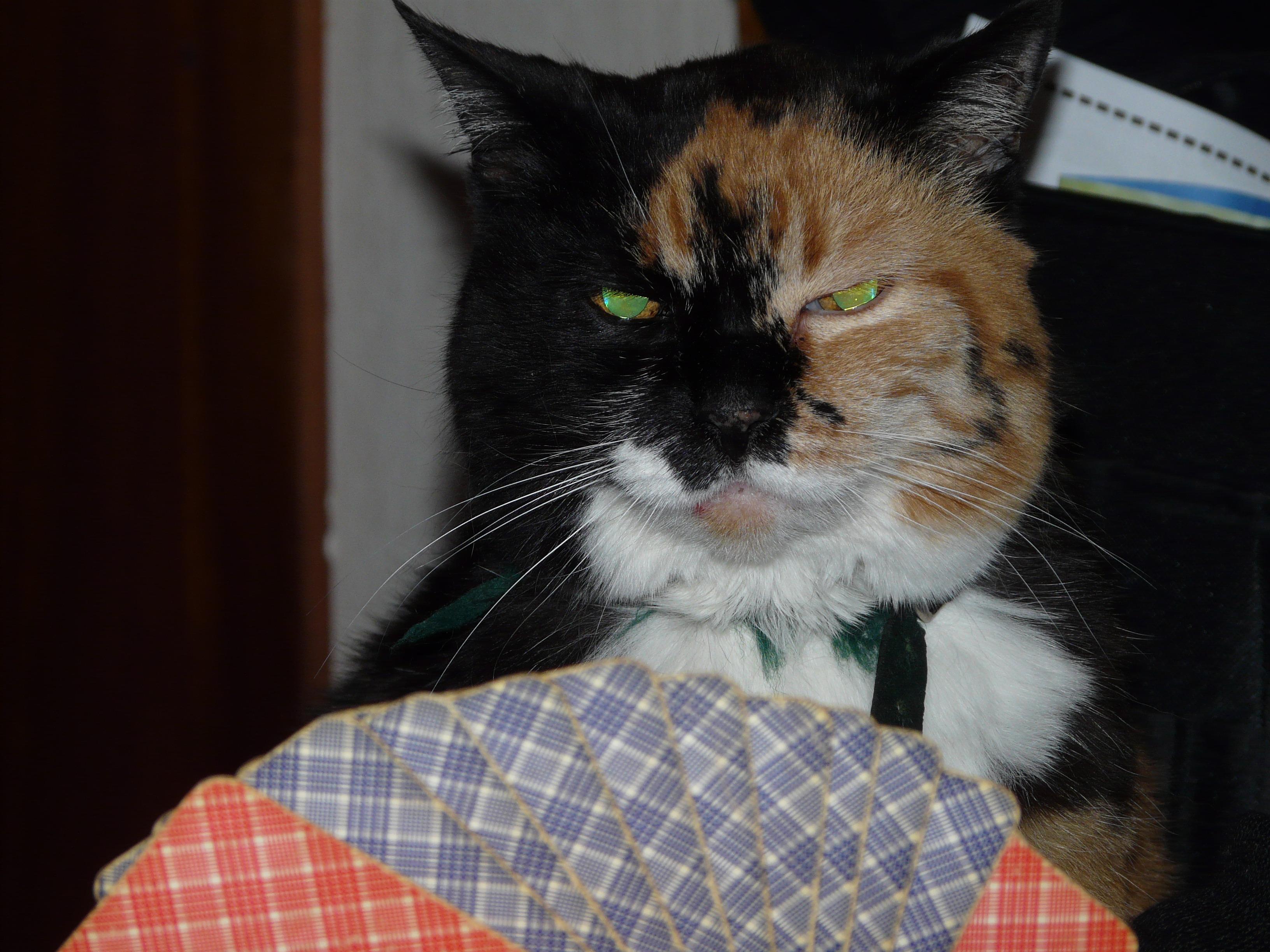Играть в кота карты рулетка онлайн анна