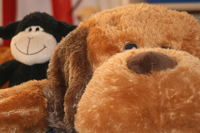 Kostenlose Foto Spielen Hund Bär Spielzeug Material Teddybär