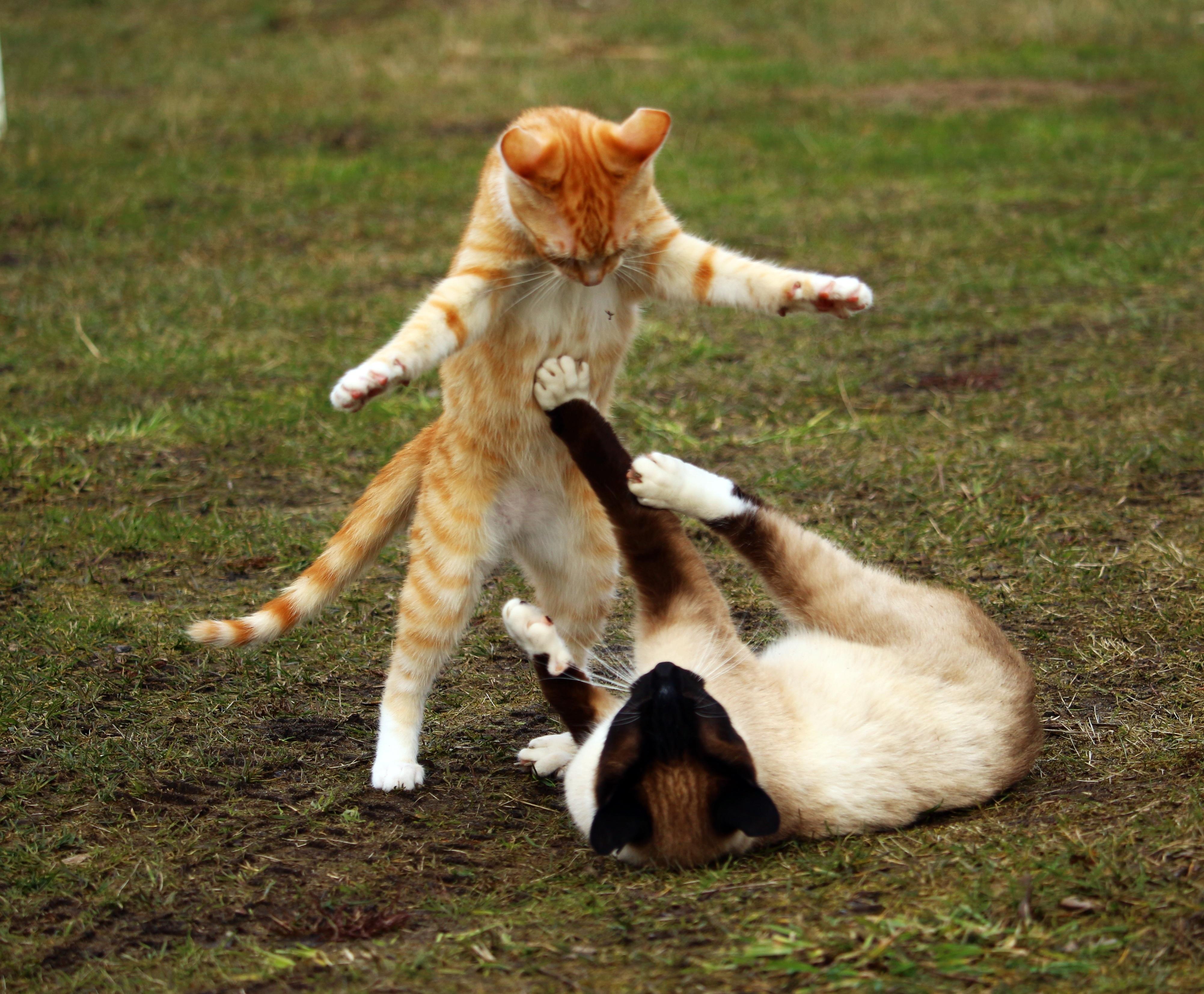 Free Dog Cat Images