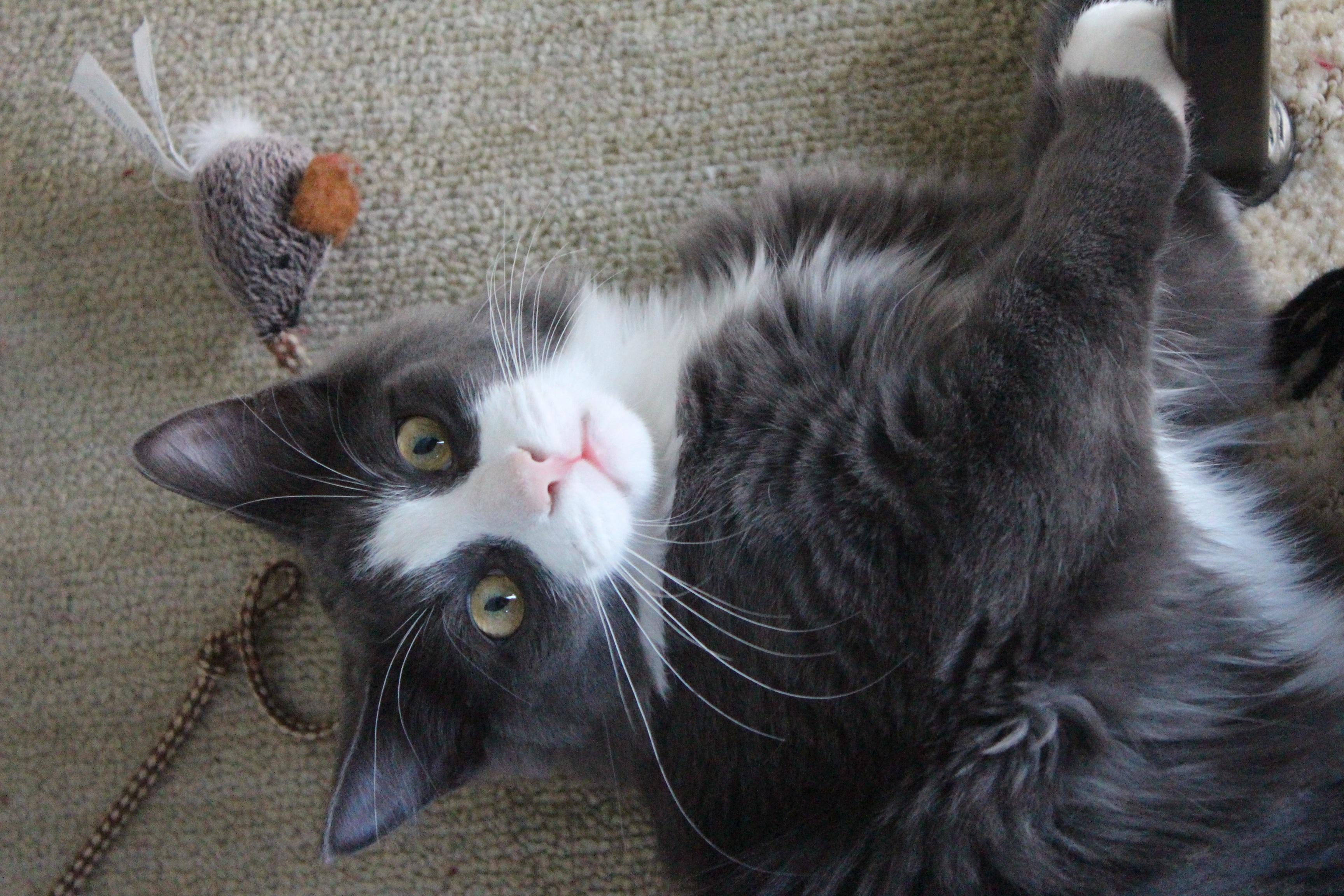 pekná mačička pics com zadarmo zadarmo eben porno