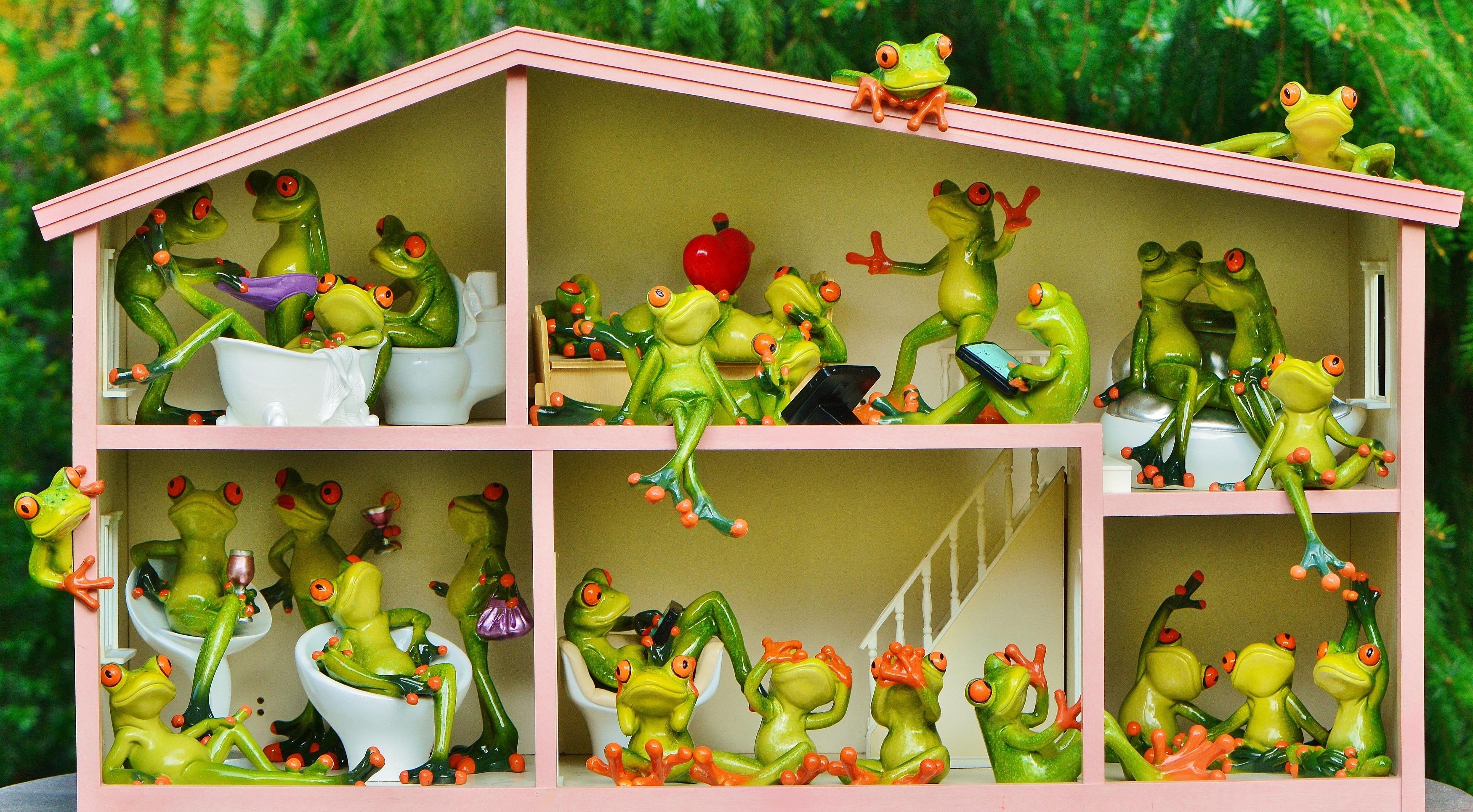 Fotos gratis jugar dulce flor animal linda vivir - Casa seleccion decoracion ...