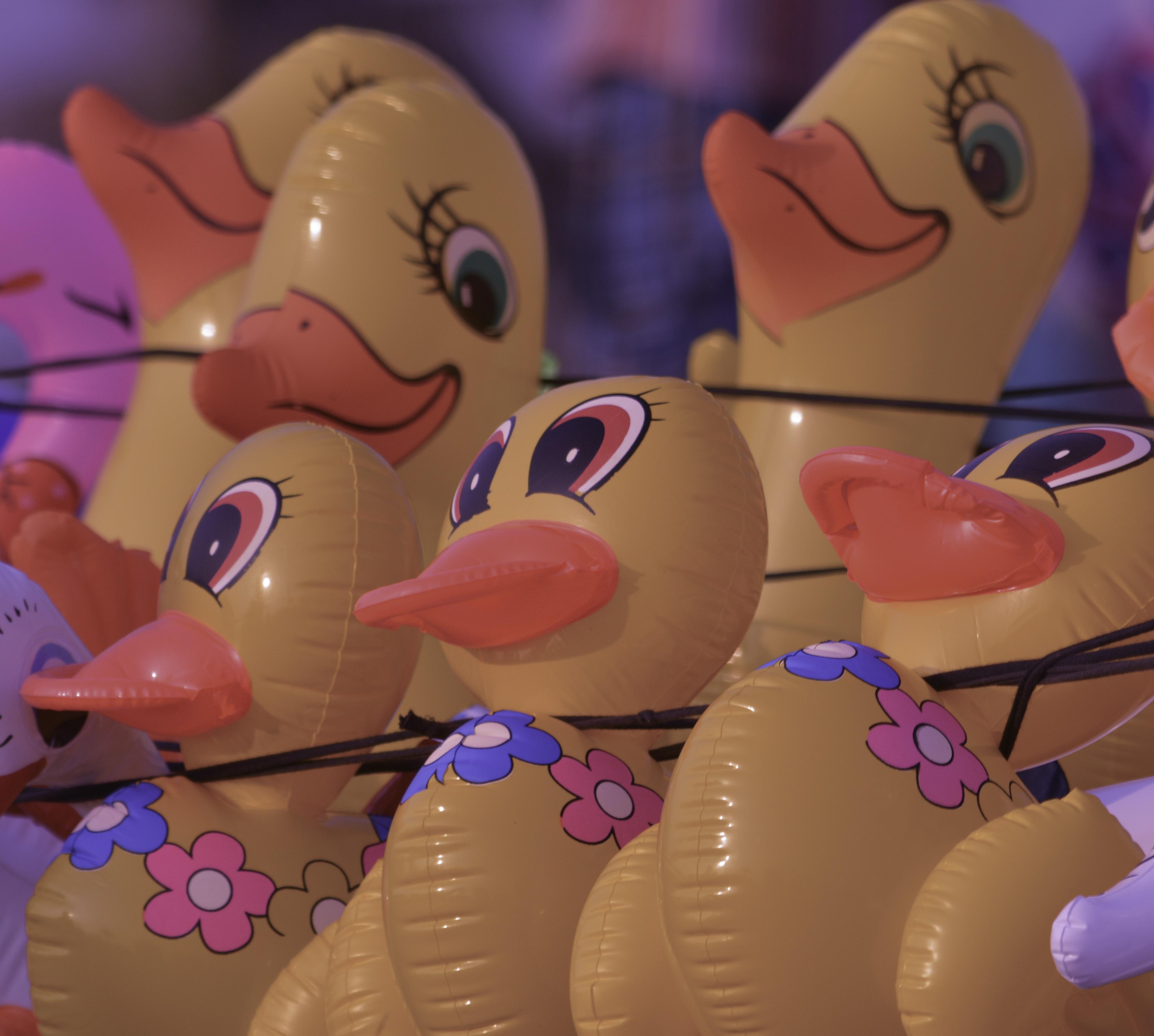 Gambar Bermain Kuning Berwarna Merah Muda Mainan Anak Bebek Karet Kesenangan Itik Burung Air