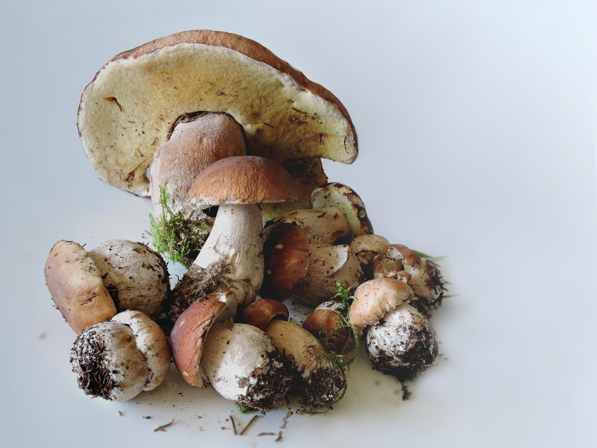 свежие грибы фото что совсем