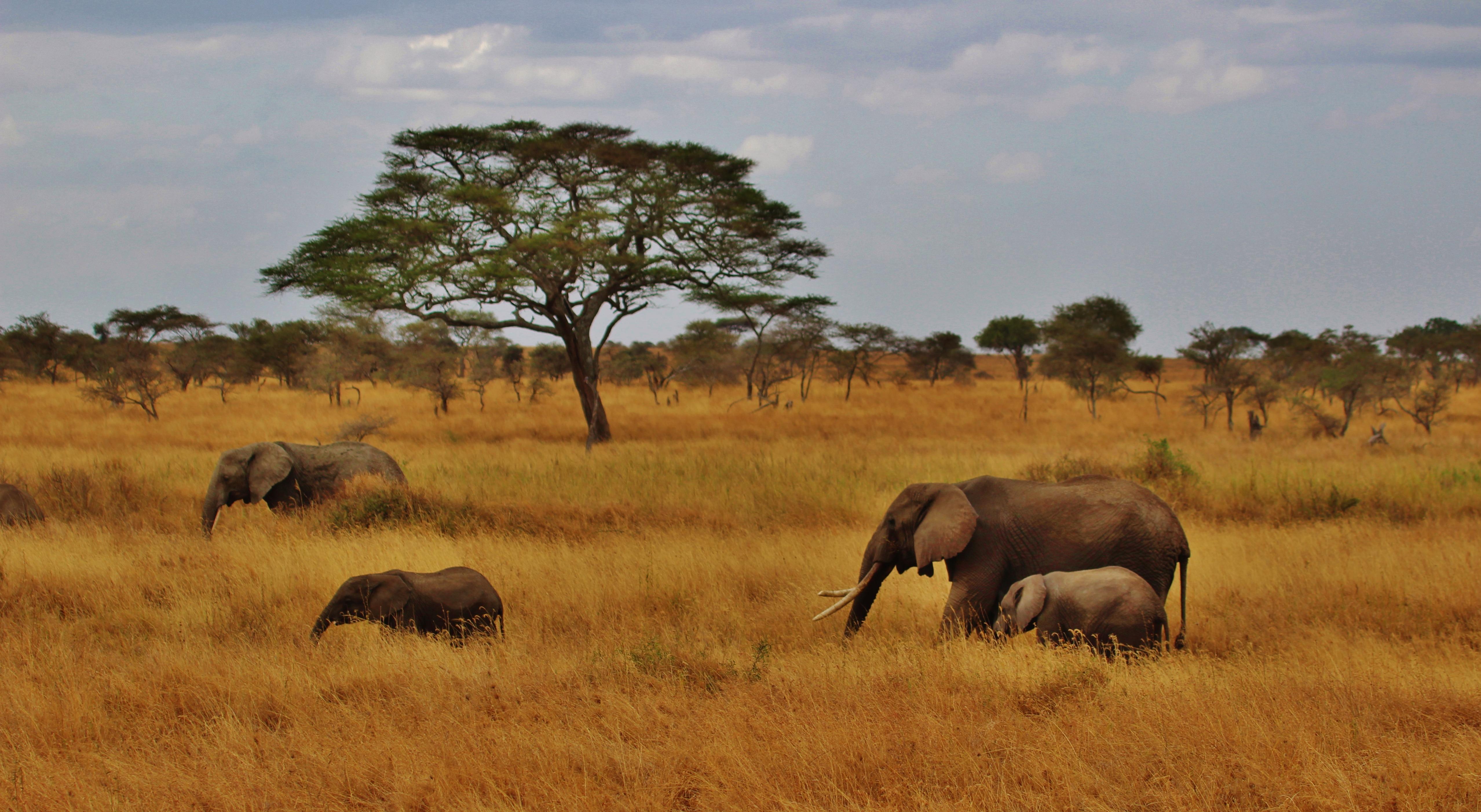 Free Images : prairie, adventure, trunk, wildlife, pasture ...