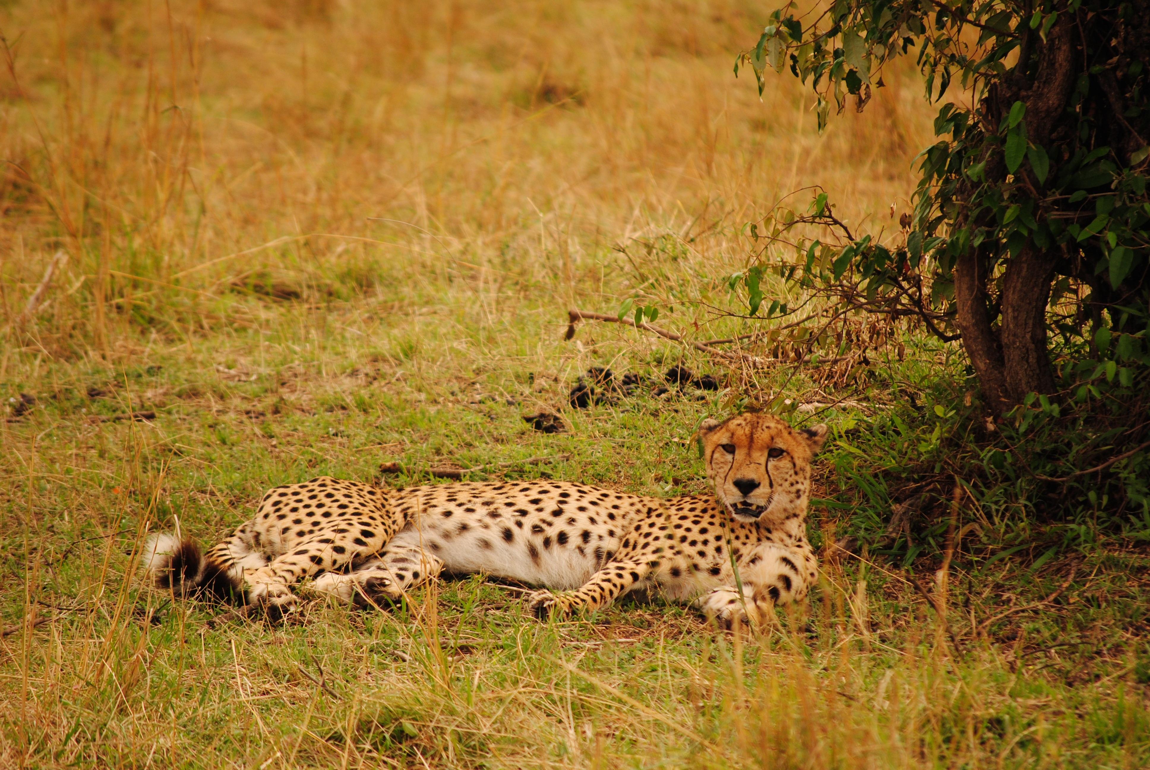 Картинки природы дикой африки