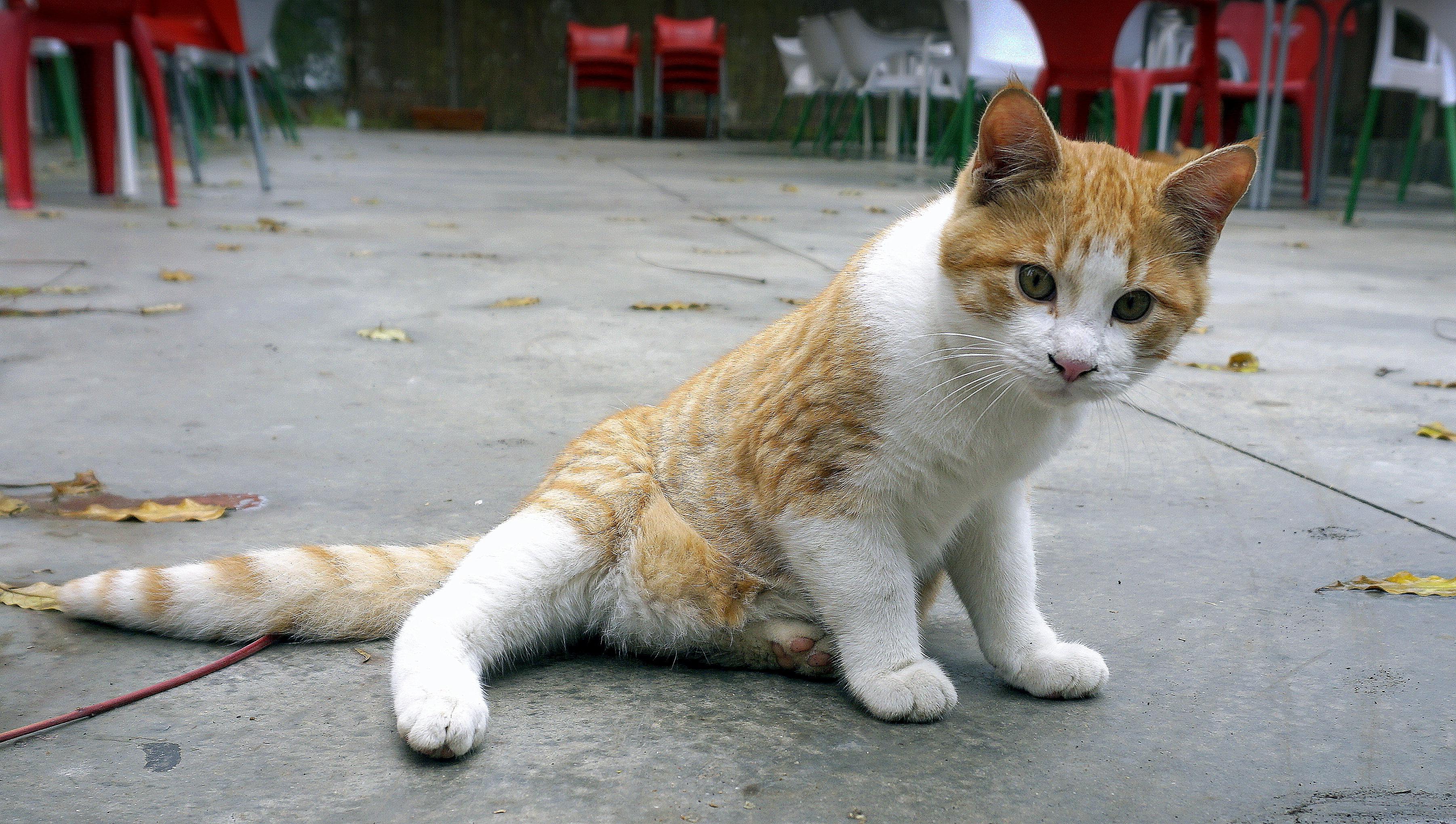 560+ Gambar Hewan Lucu Kucing Gratis Terbaru