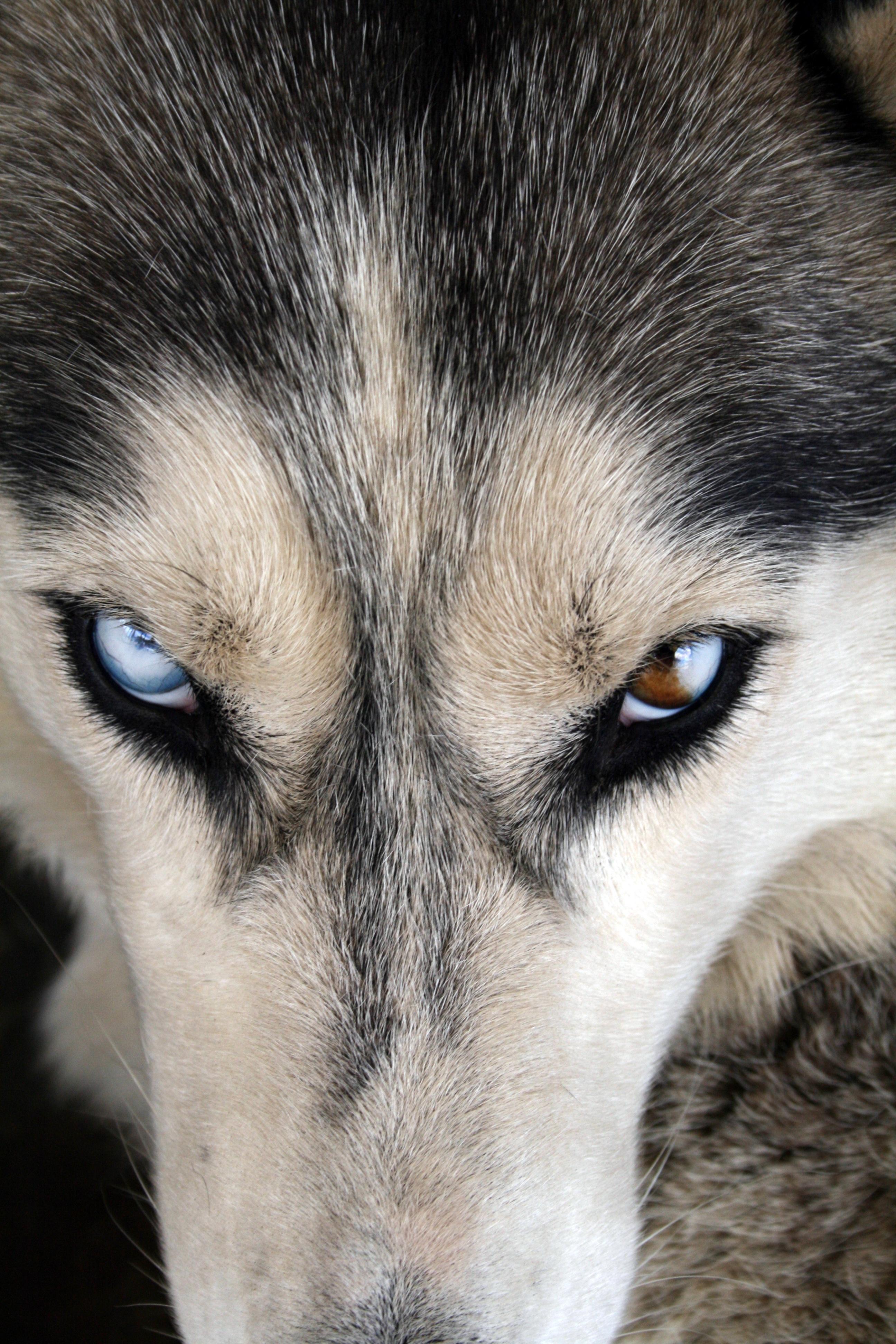 Images Gratuites : chiot, canin, animal de compagnie