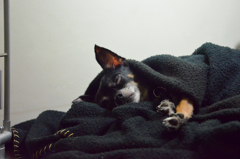 Fotos Gratis Perrito Perro Animal Linda Canino