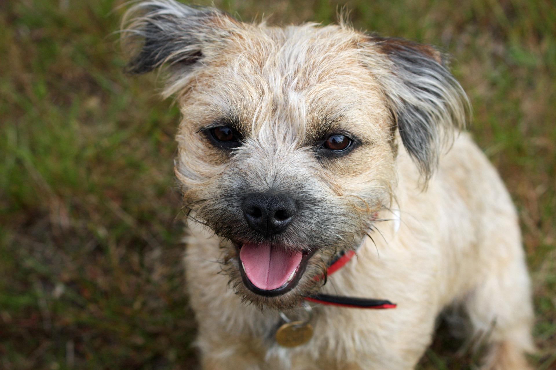 Free Images Puppy Animal Cute Canine Photo Pet Portrait