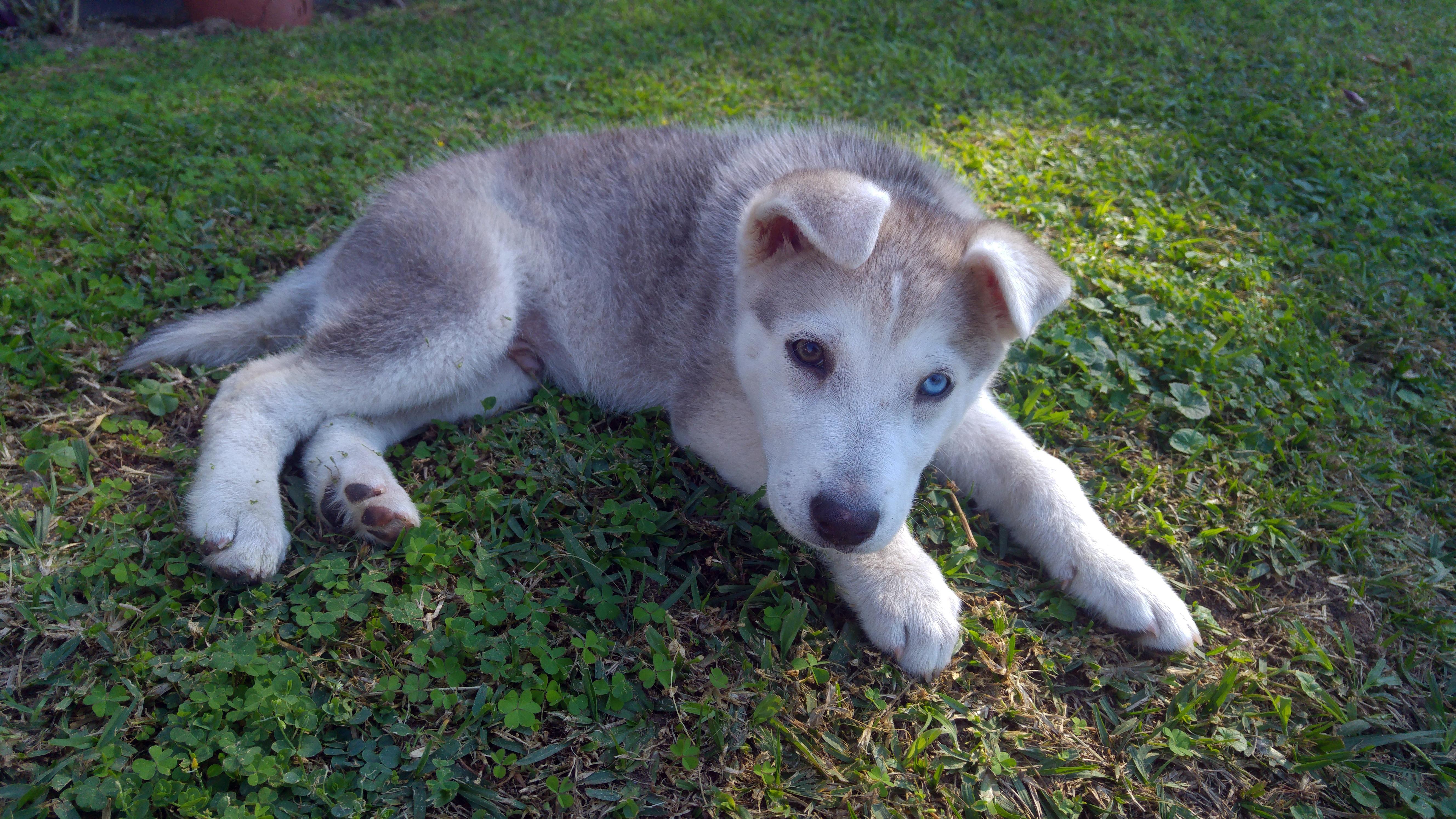 Fotos Gratis Perrito Animal Linda Mascota Joven