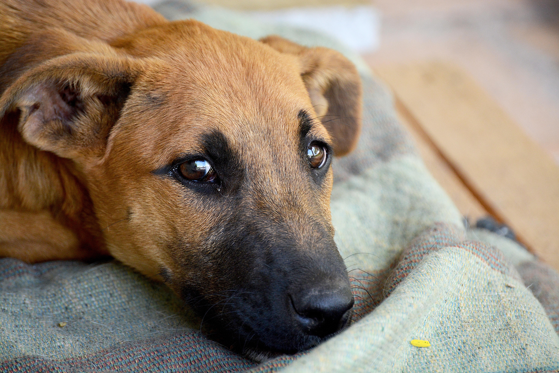 33++ Foto anjing sedih terbaru