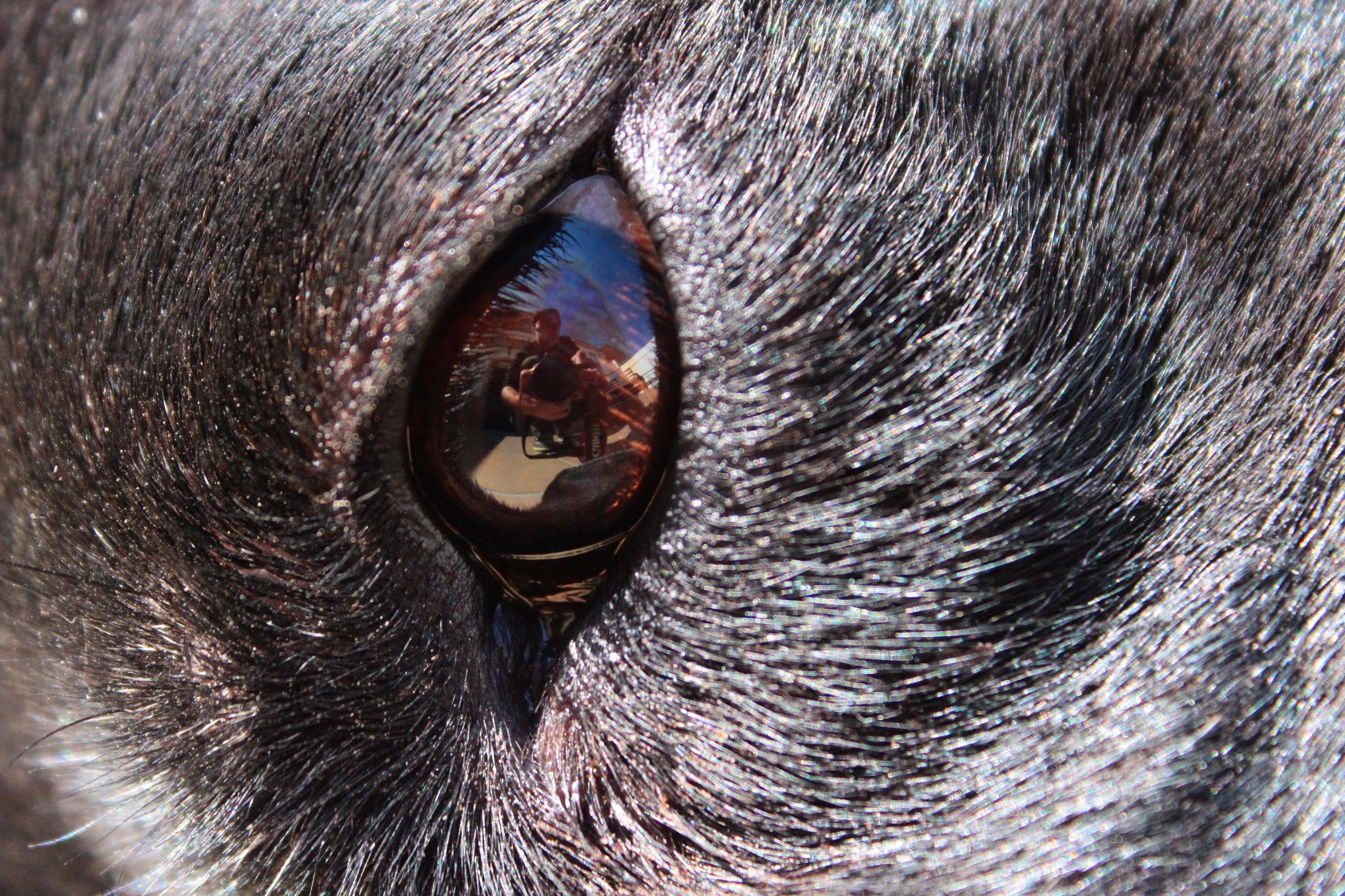 hårete svart tispe