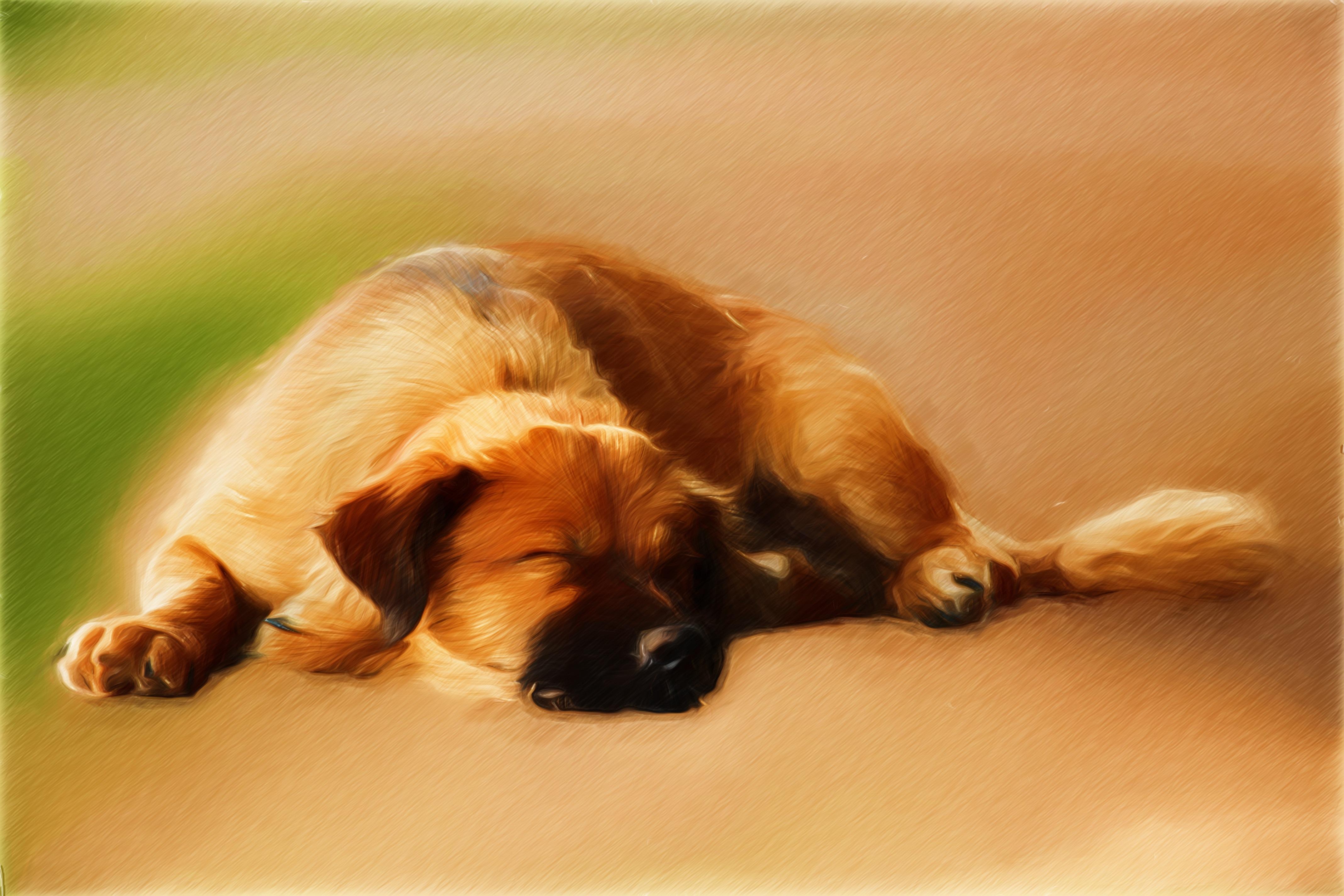 Fotos Gratis Perrito Perro Pintar Art Dormir Dibujo