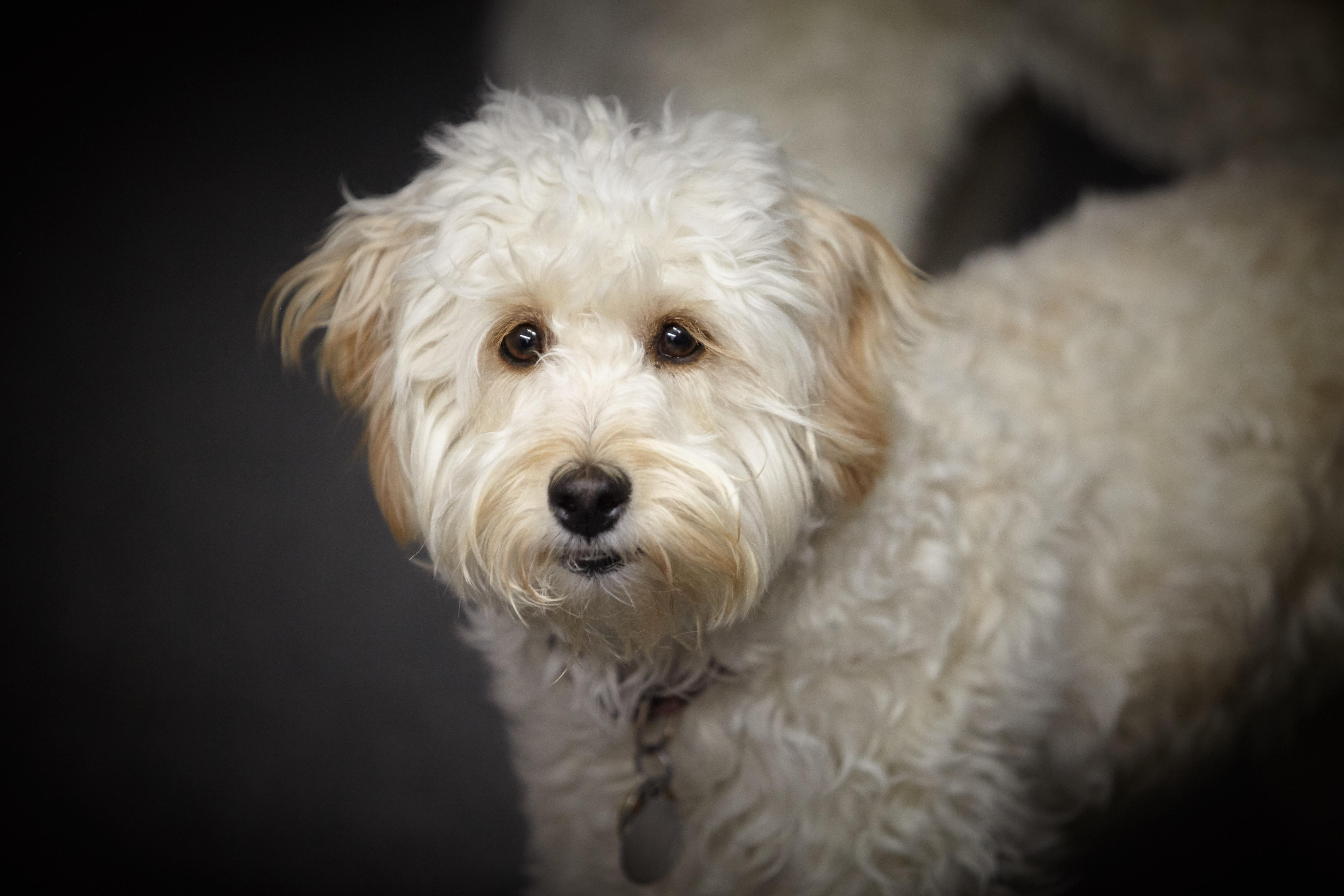 Free puppy cute pet face vertebrate dog breed