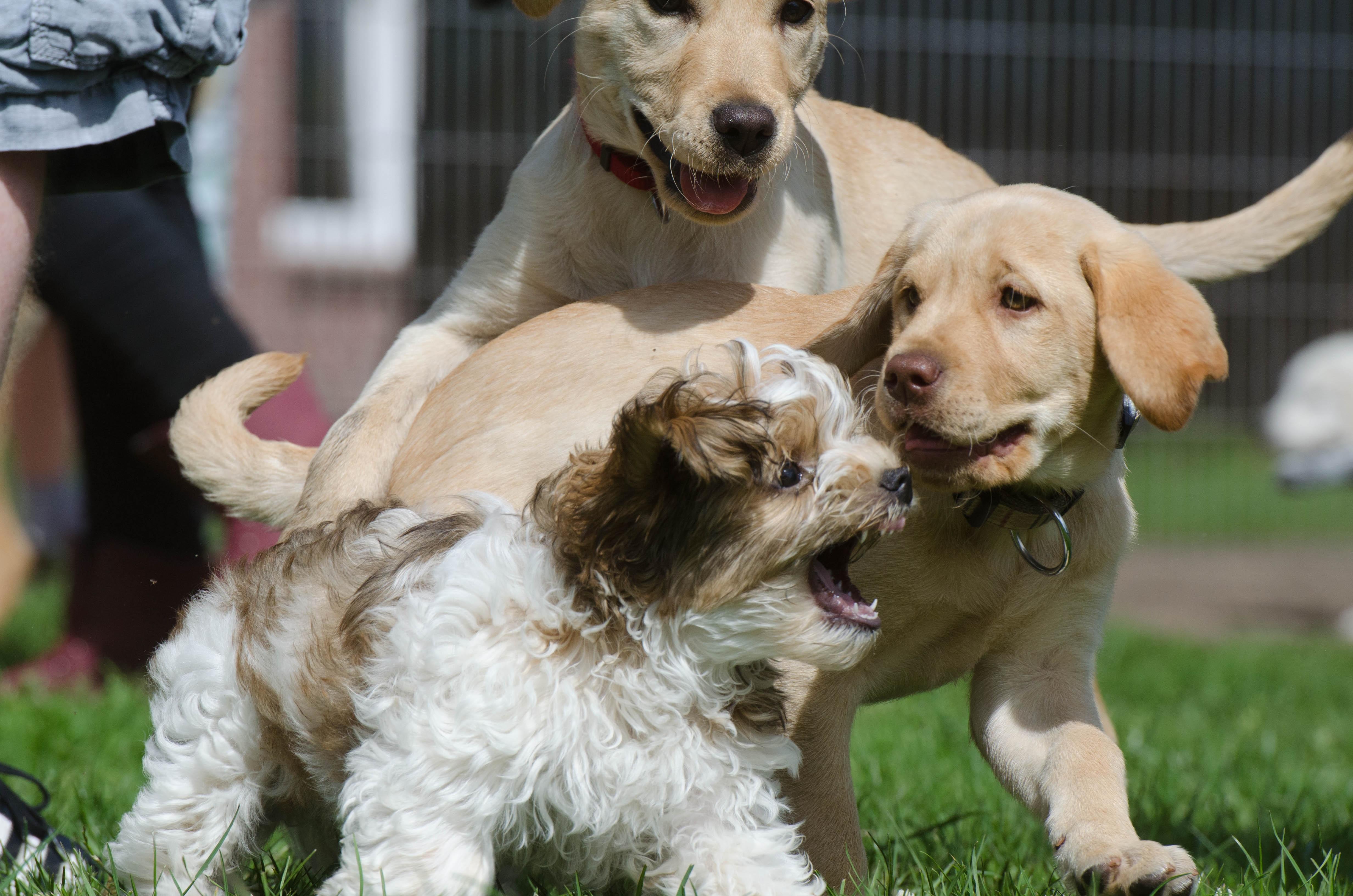Fotos de perros show show 6
