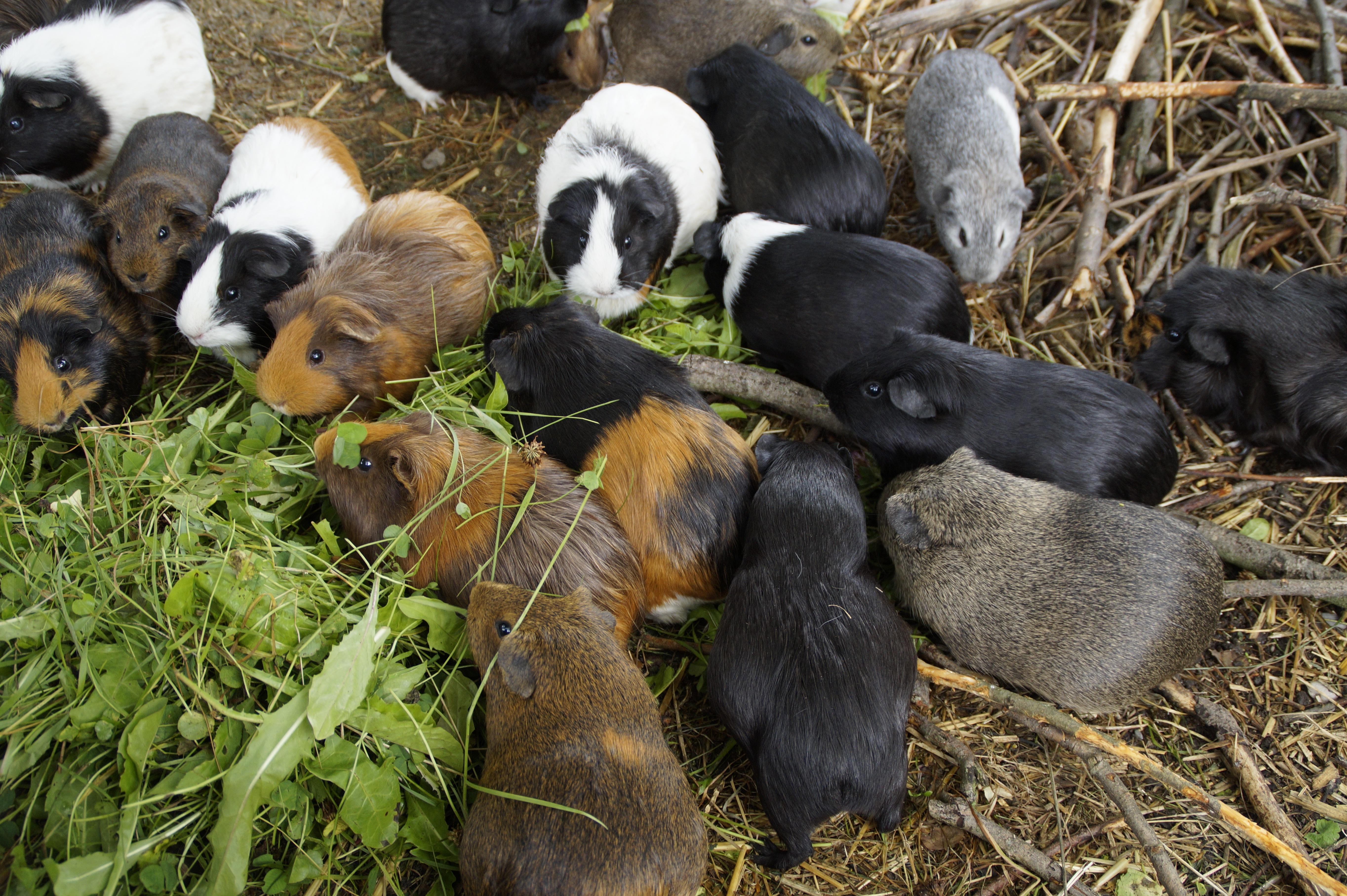 Gambar Anak Anjing Makan Binatang Menyusui Marmot Hewan