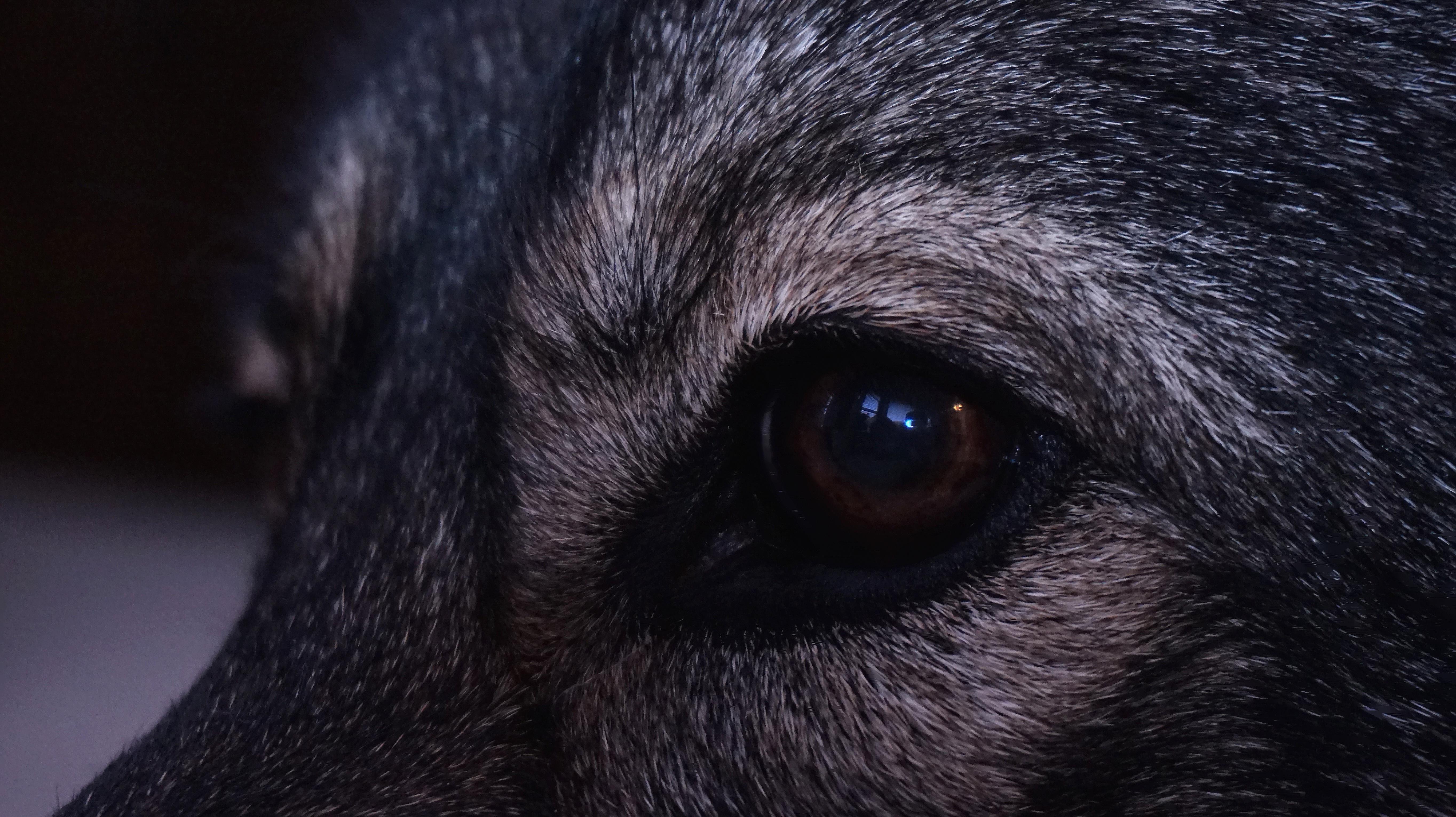 глаза волка у человека фото григория есть