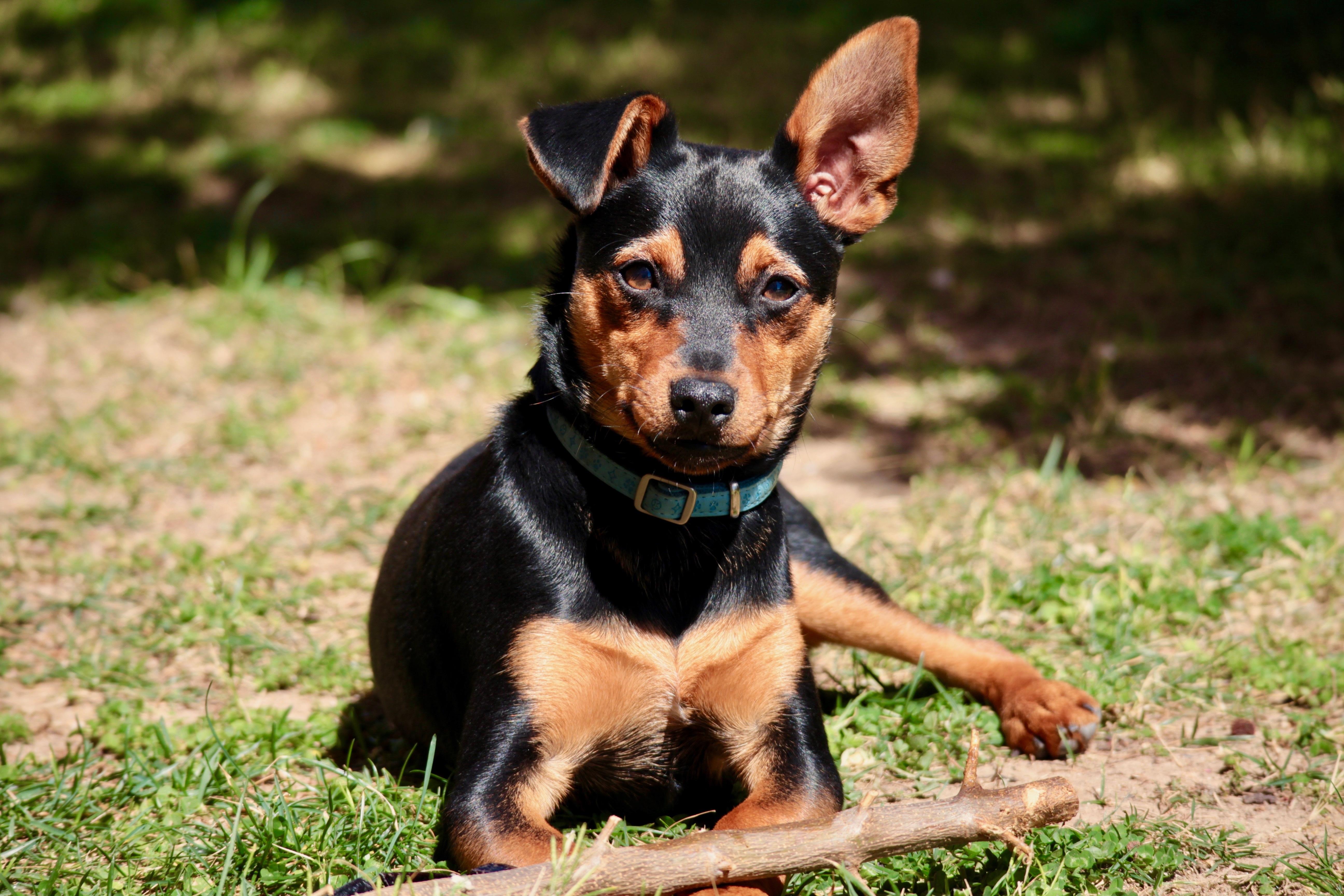 Free Images Puppy Friendship Animals Ears Vertebrate