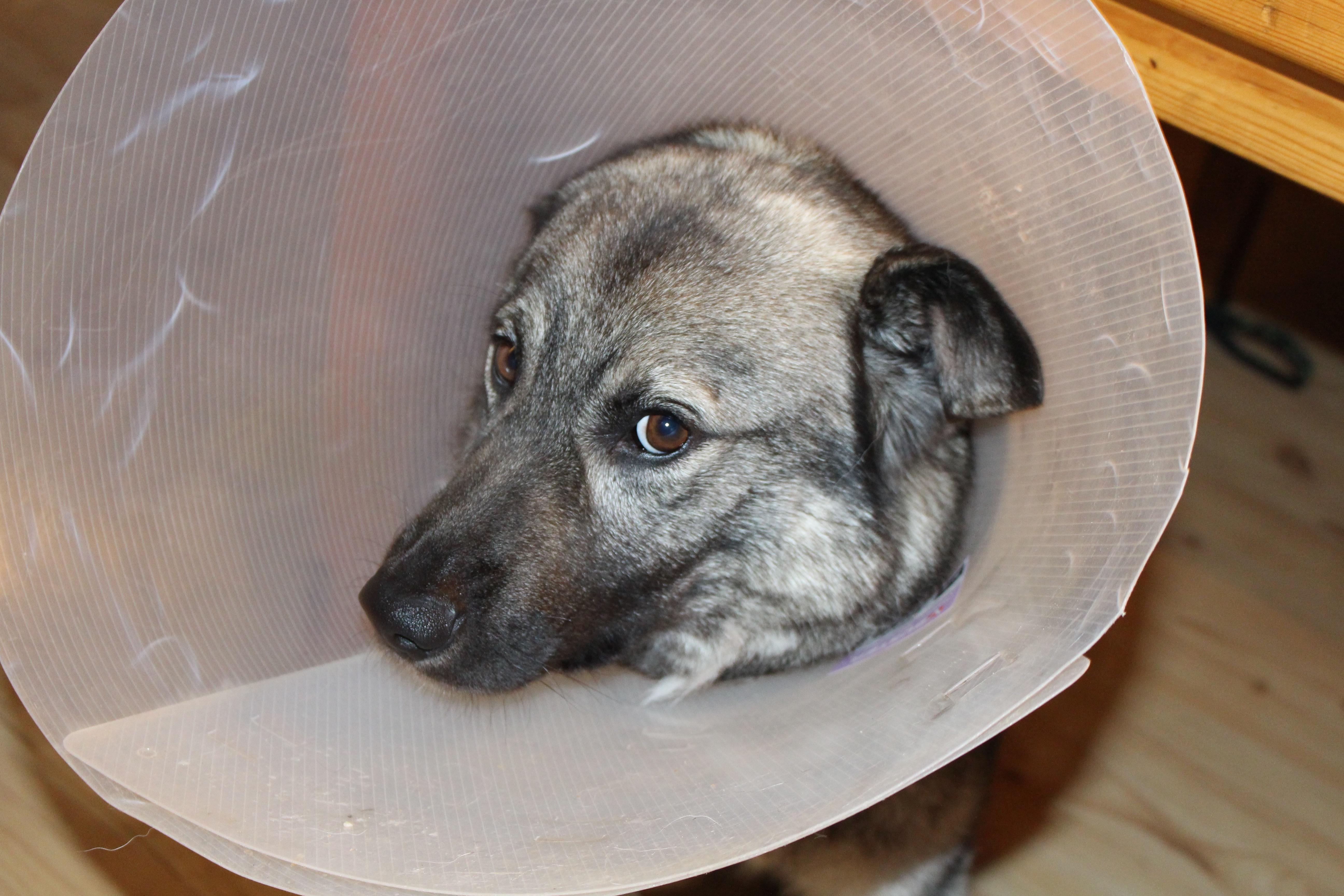 Free Images : puppy, vertebrate, funnel, sick dog, street ...