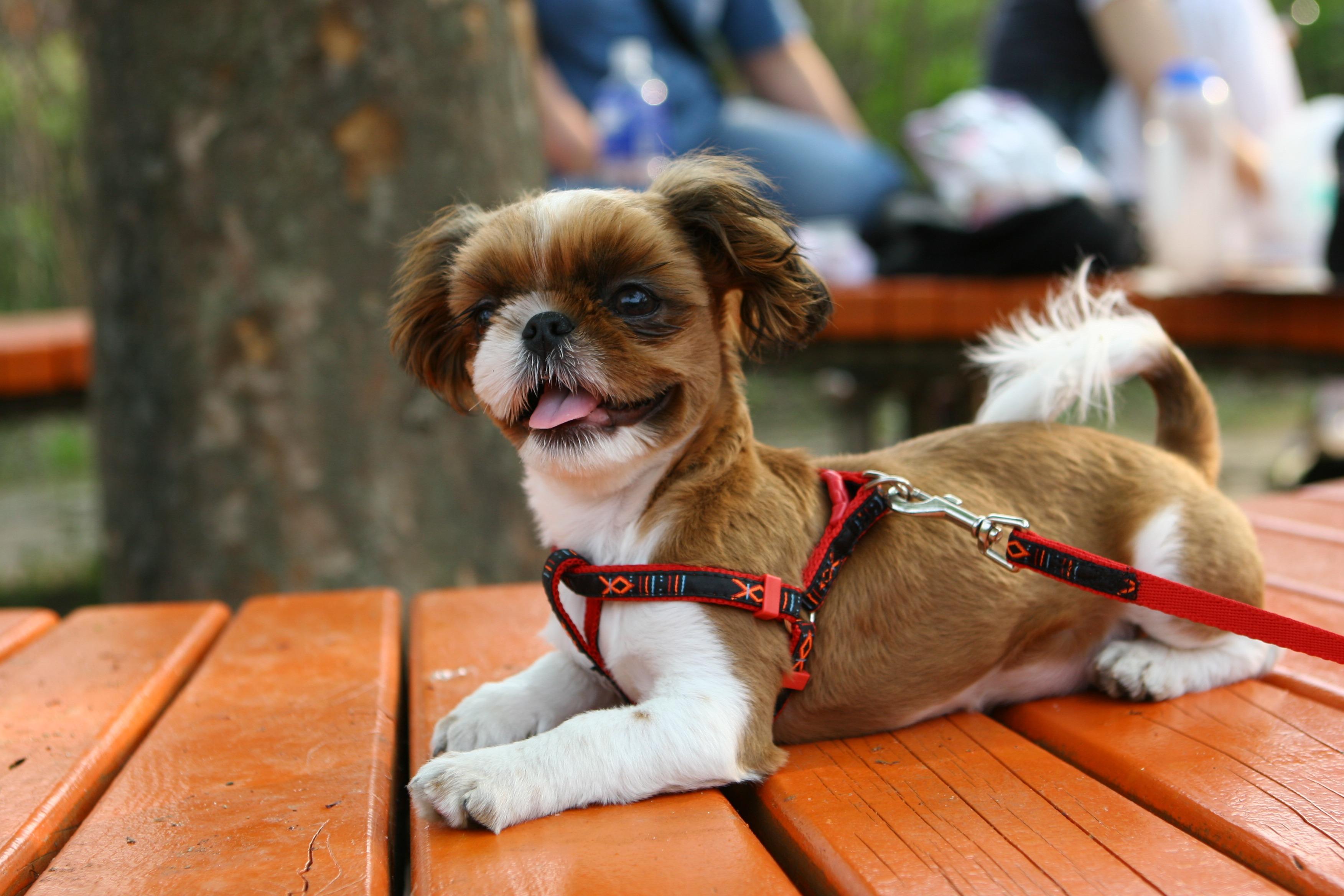 Gambar anak anjing berjalan taman binatang menyusui kacamata #6: puppy dog walk park mammal glasses vertebrate dog like mammal