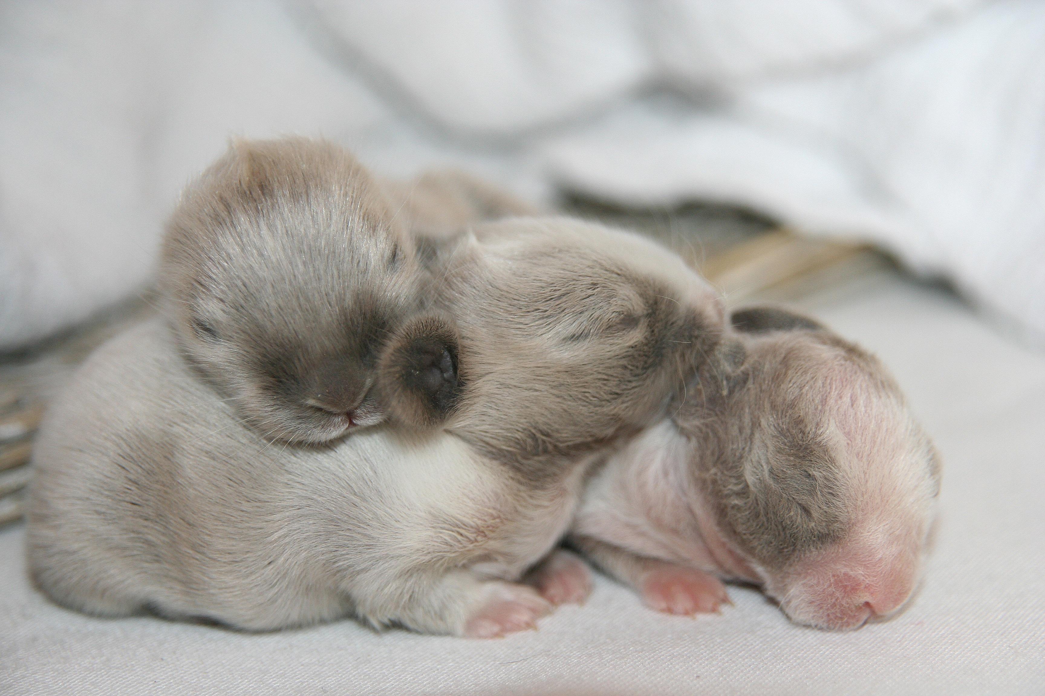 les chaton à DONNER