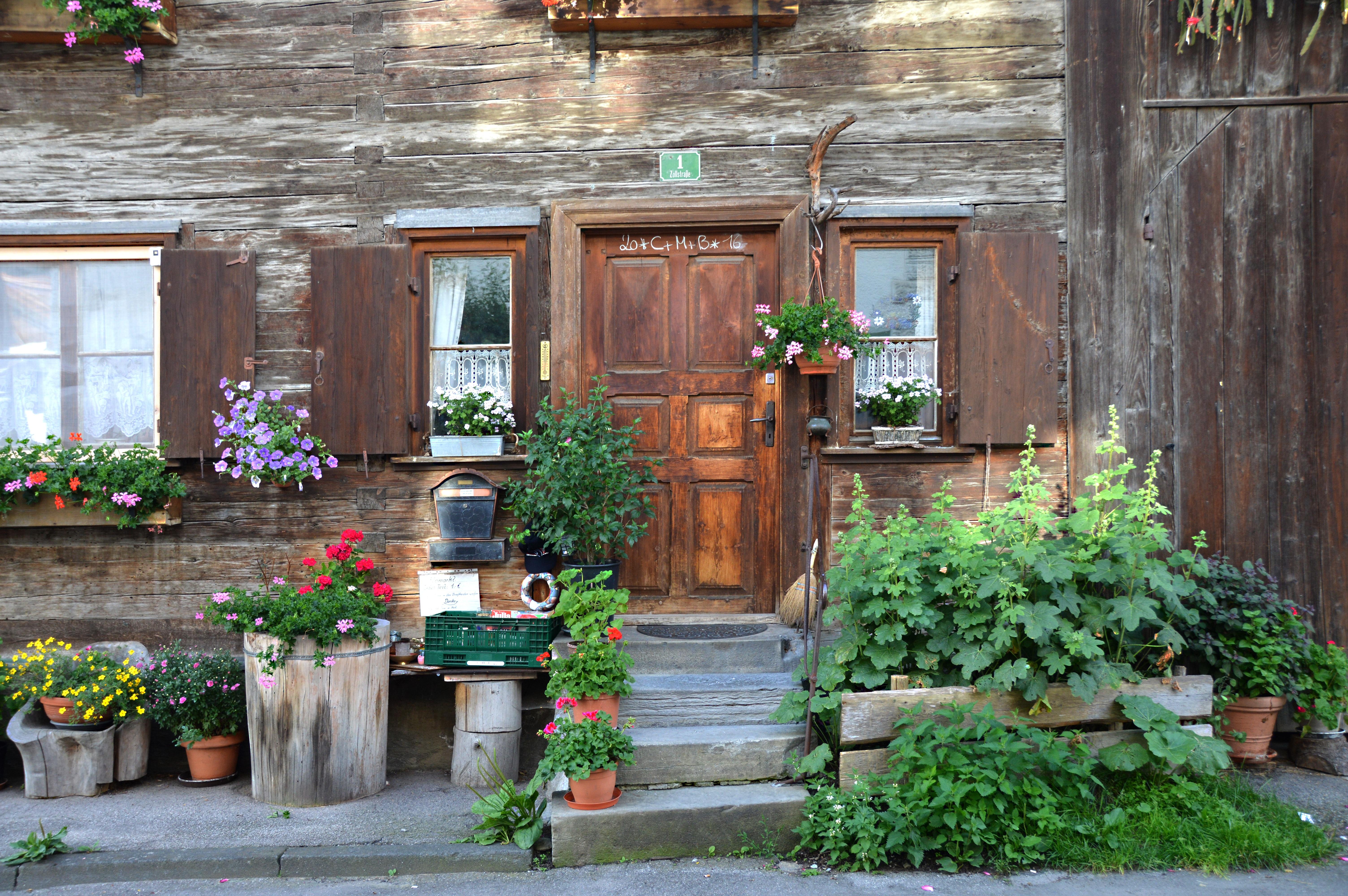 Цветы на деревенском дворе фото