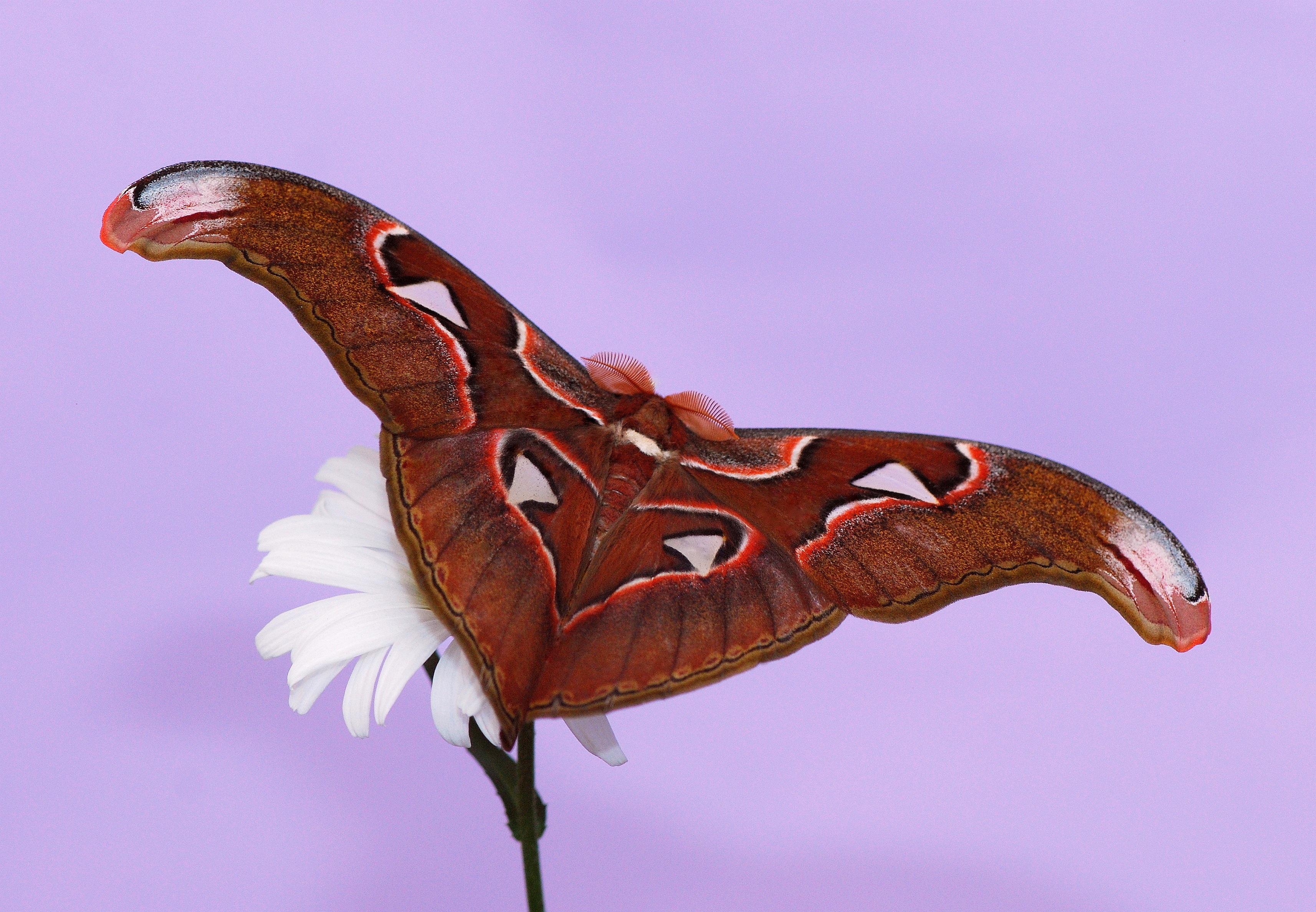 free images insect fauna invertebrate large exotic macro