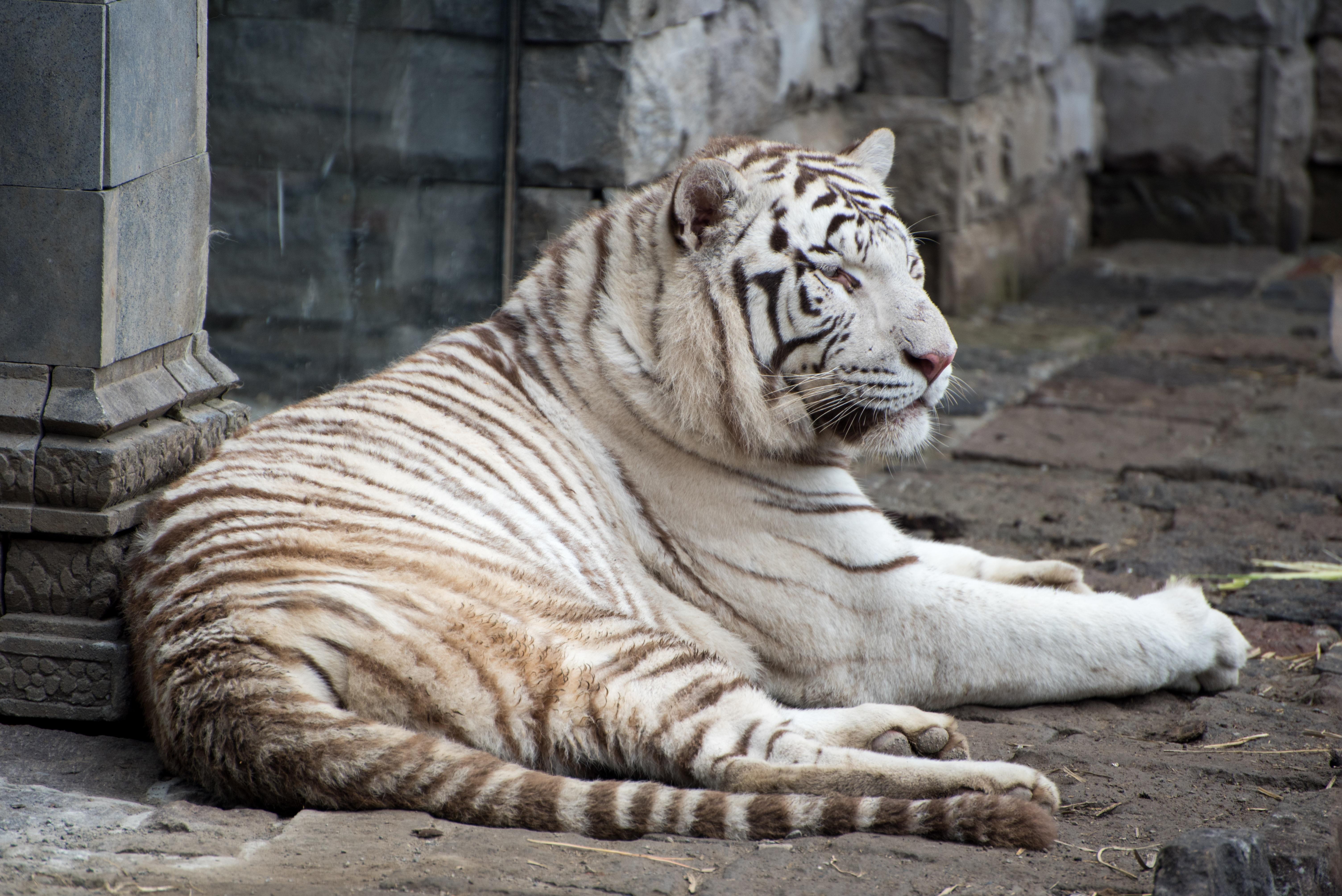 Gambar Margasatwa Liar Kebun Binatang Binatang Menyusui