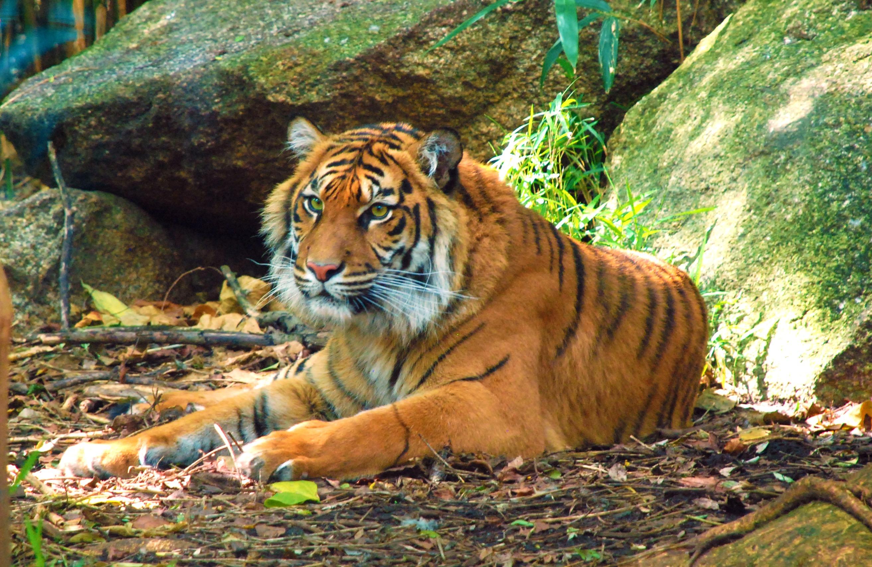 Ebony safari tiger swallows spits suga slim n french boy p2 10