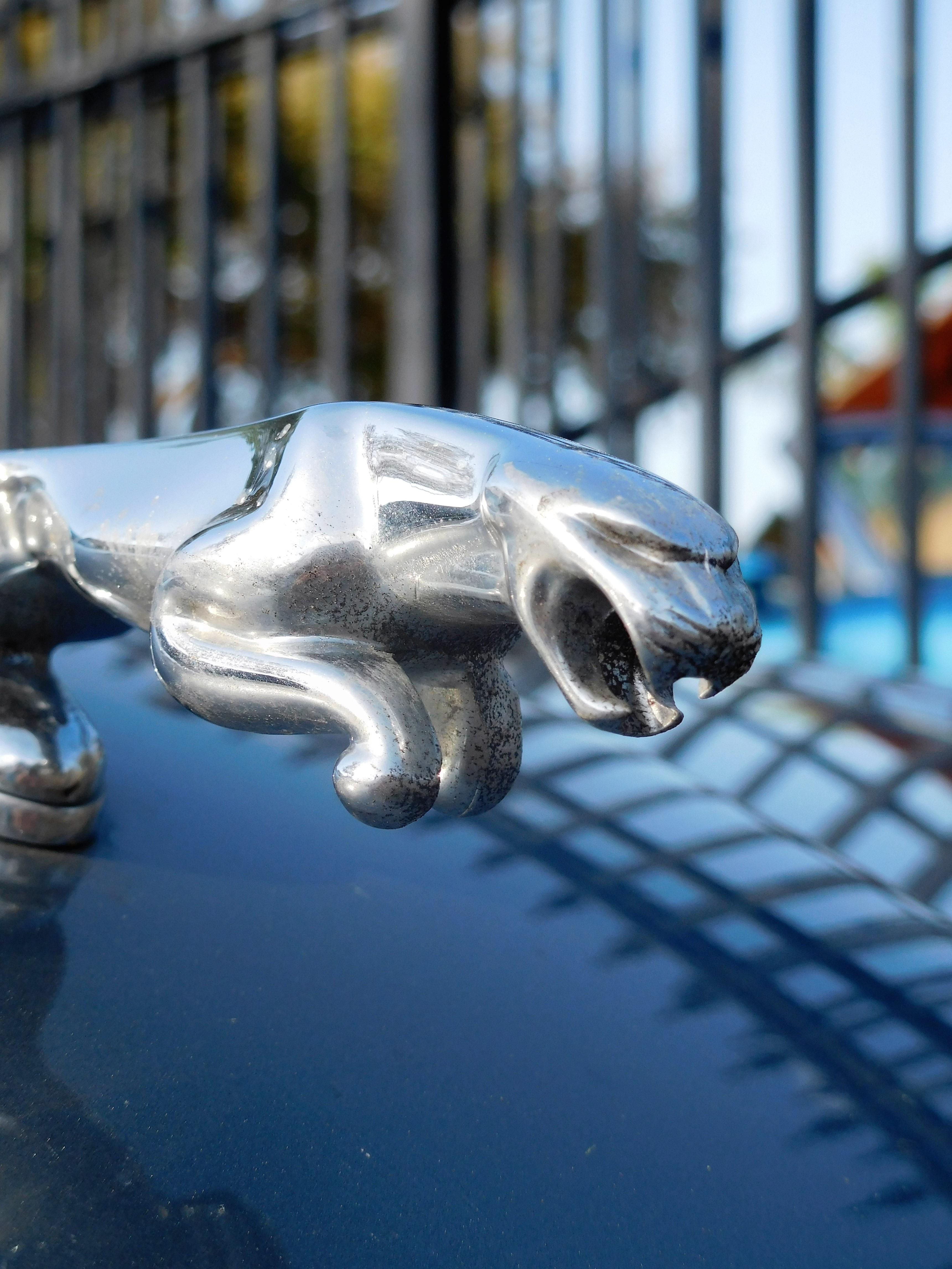 Значок машины зверь