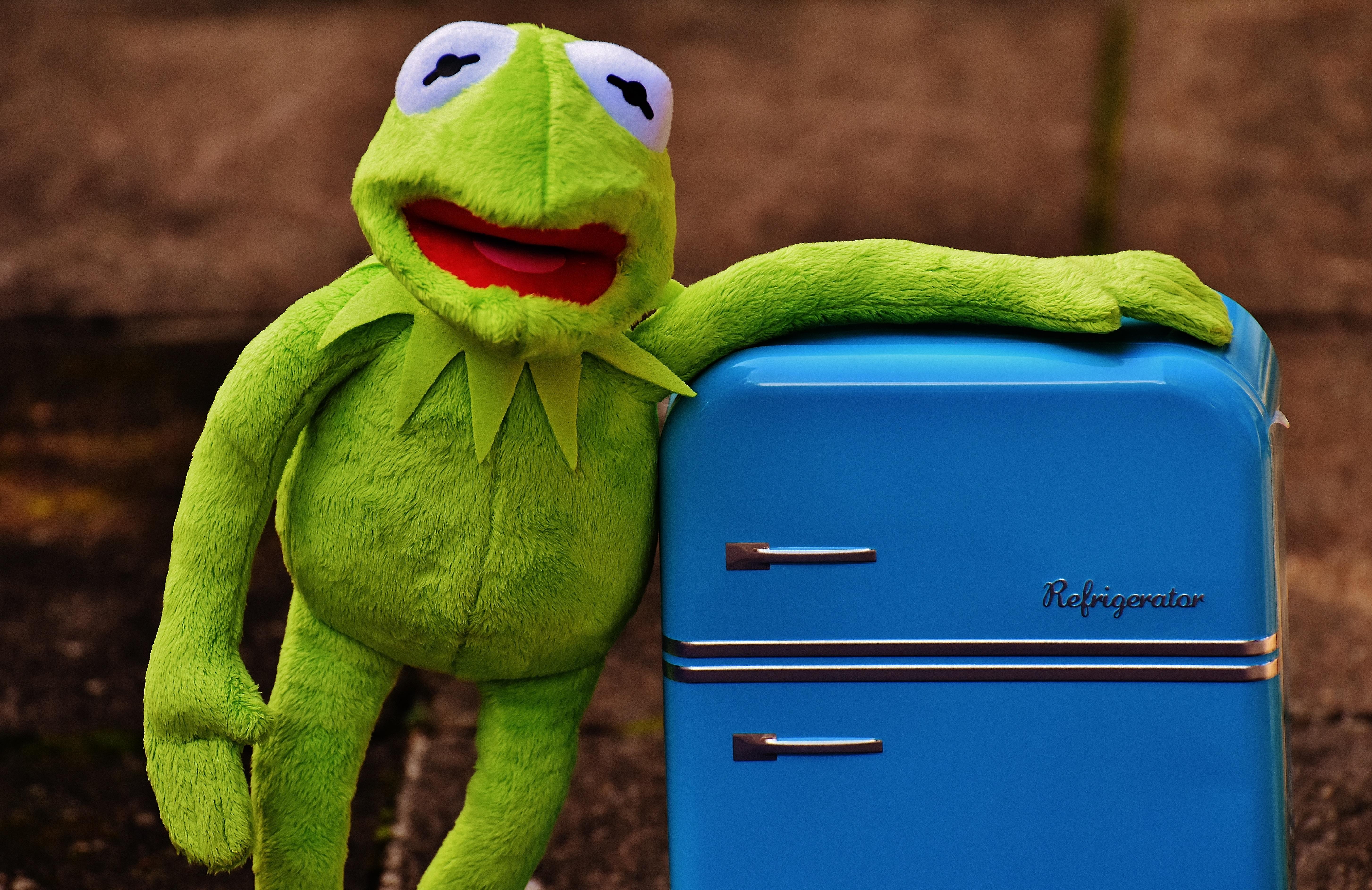 kostenlose foto retro gr n farbe frosch fauna textil spielzeug komisch ausgestopftes. Black Bedroom Furniture Sets. Home Design Ideas