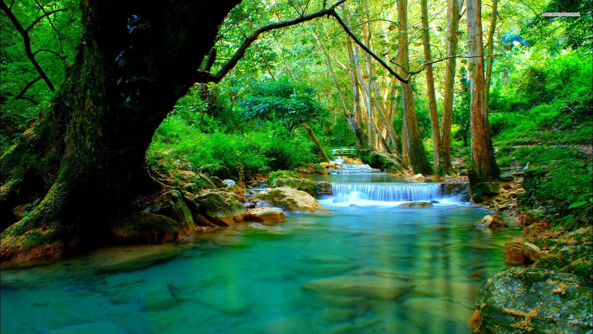 Gratis Afbeeldingen Rivier Water Vegetatie Natuur