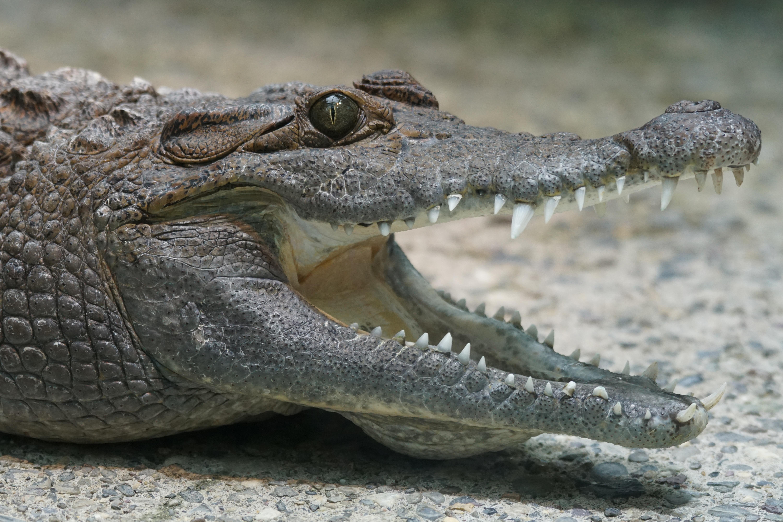 крокодил фото картинки точки зрения