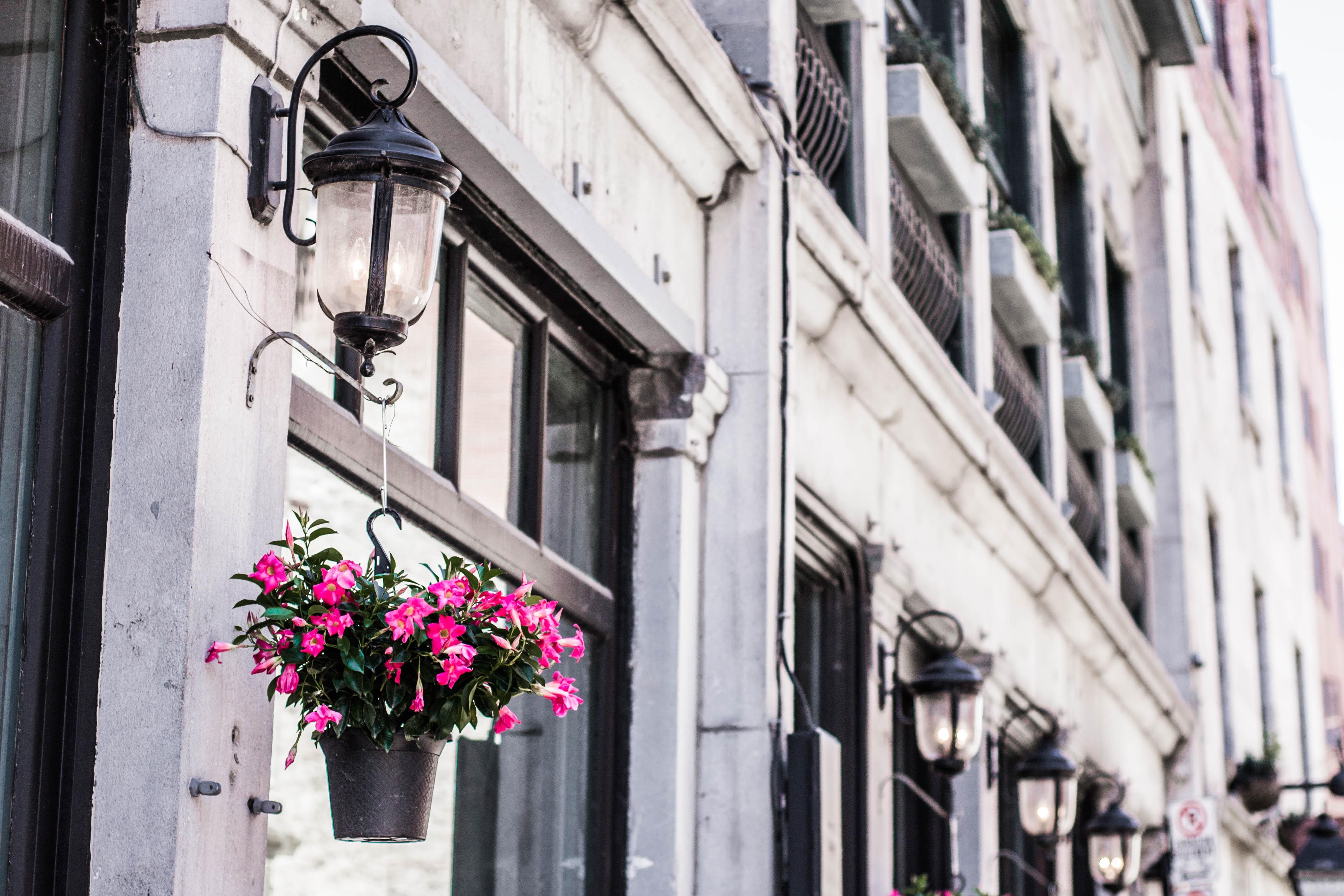 заячьи растения на улицах города фото представить вам