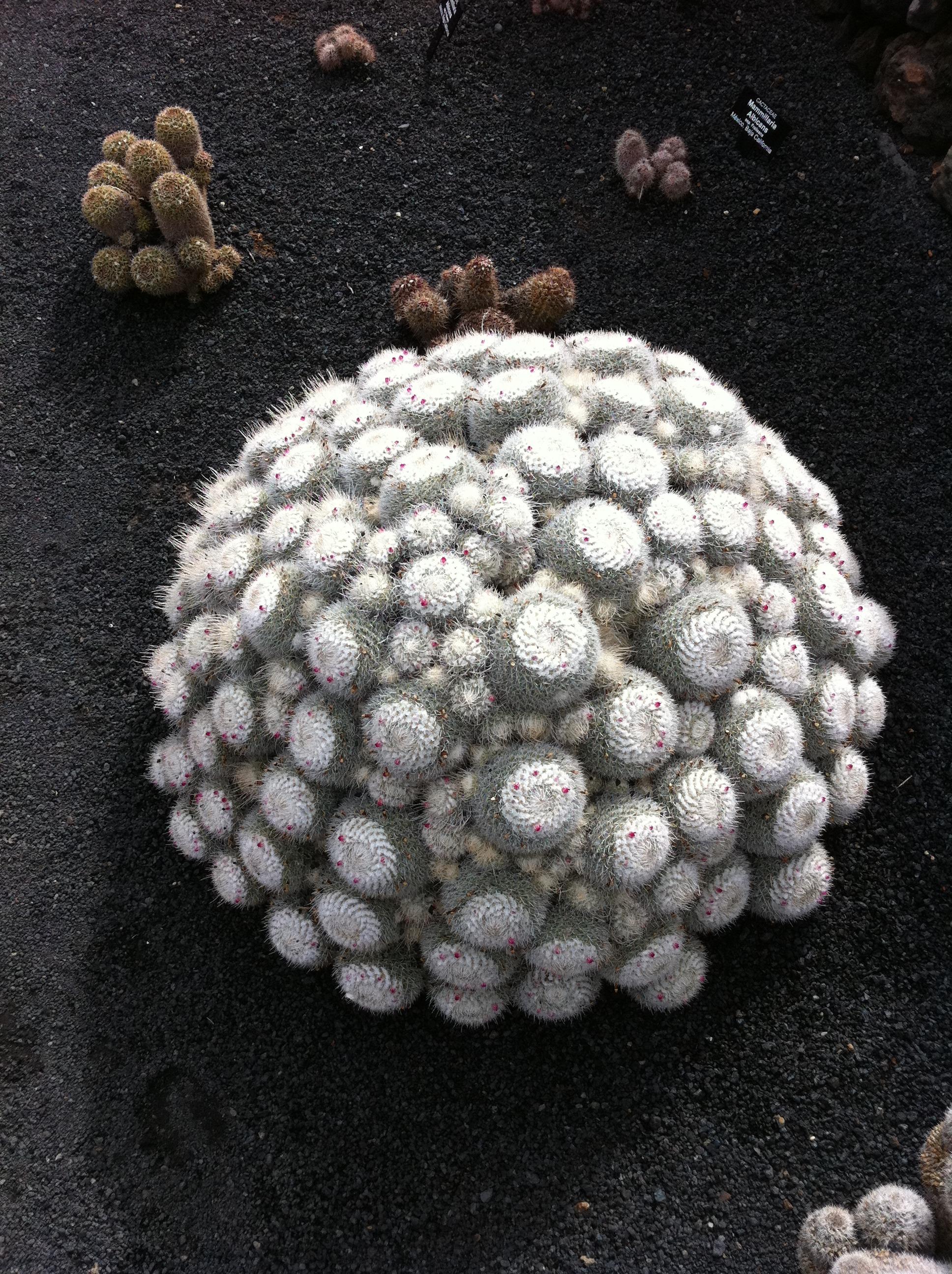 Kostenlose foto : Rock, Blume, Muster, Kieselstein, Perle, Material ...