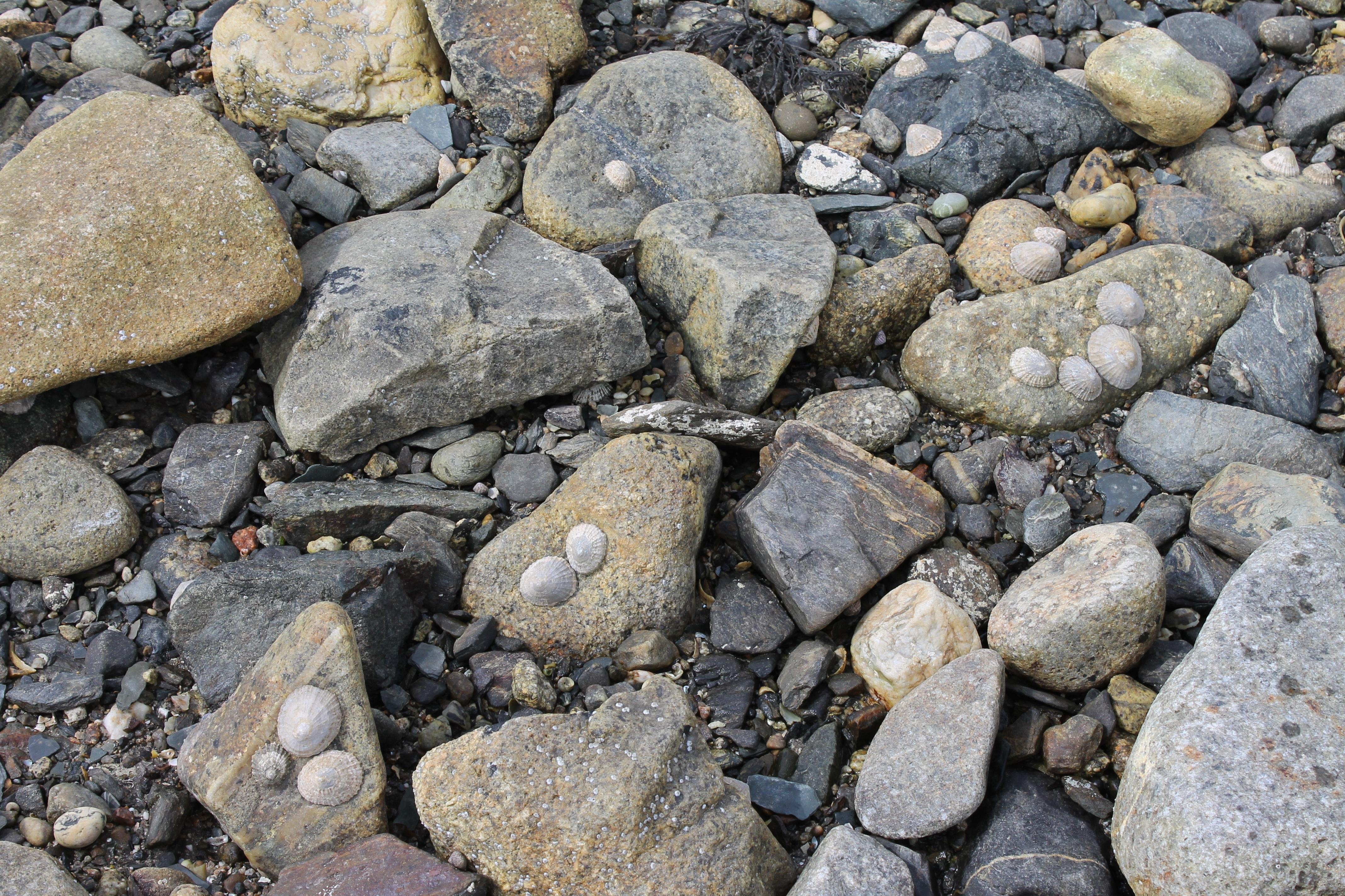 Gambar Batu Besar Kerikil Tanah Dinding Batu Pantai Laut