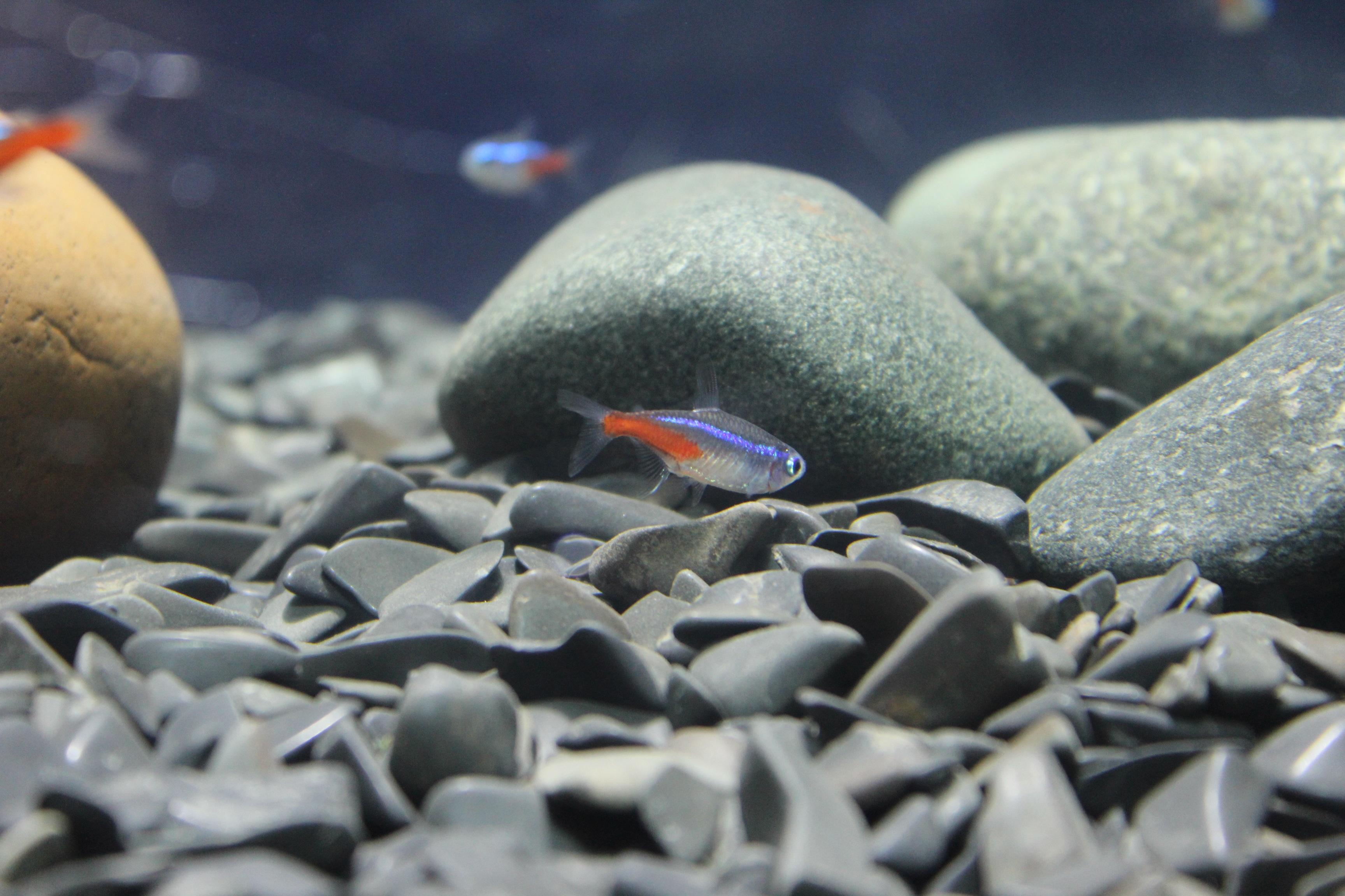 Камни для рыб в картинках
