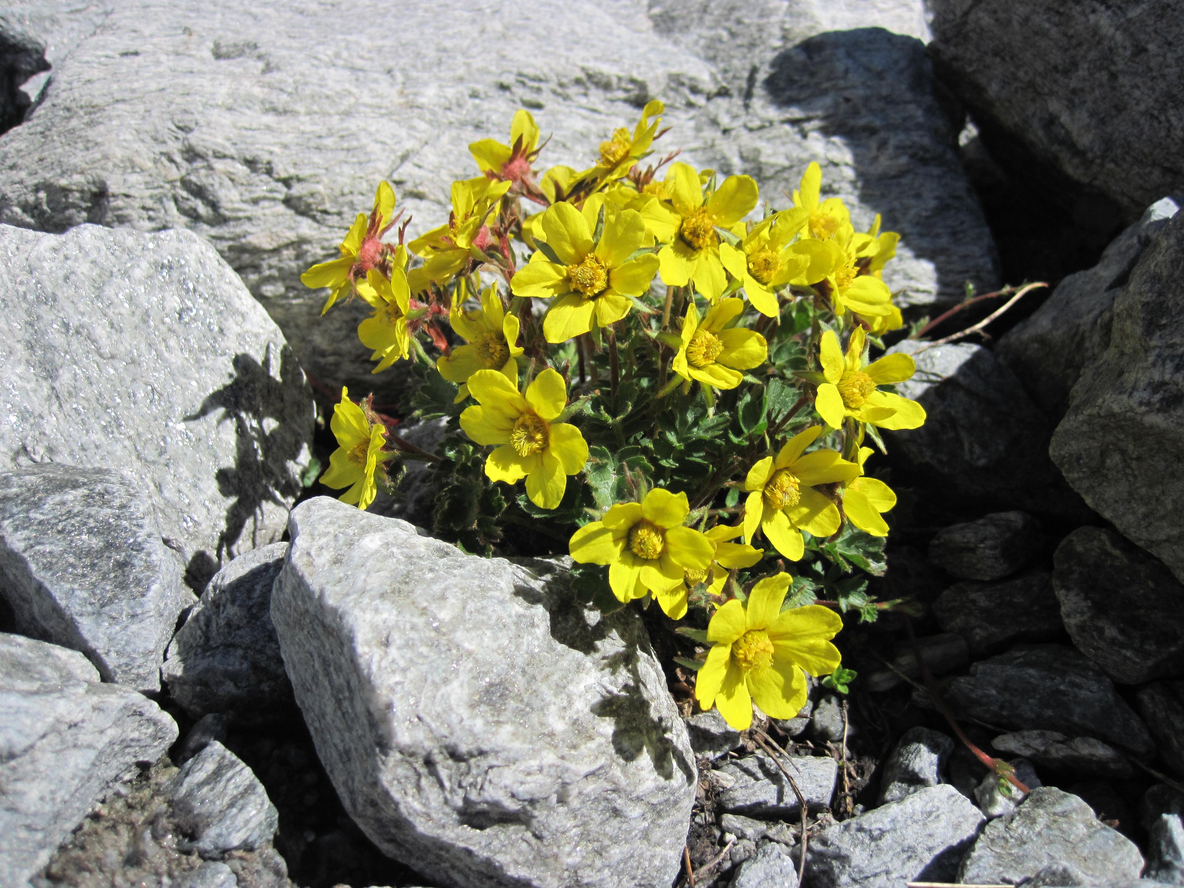 Fleurs sauvages de printemps jaunes - Arbuste fleurs jaunes printemps ...