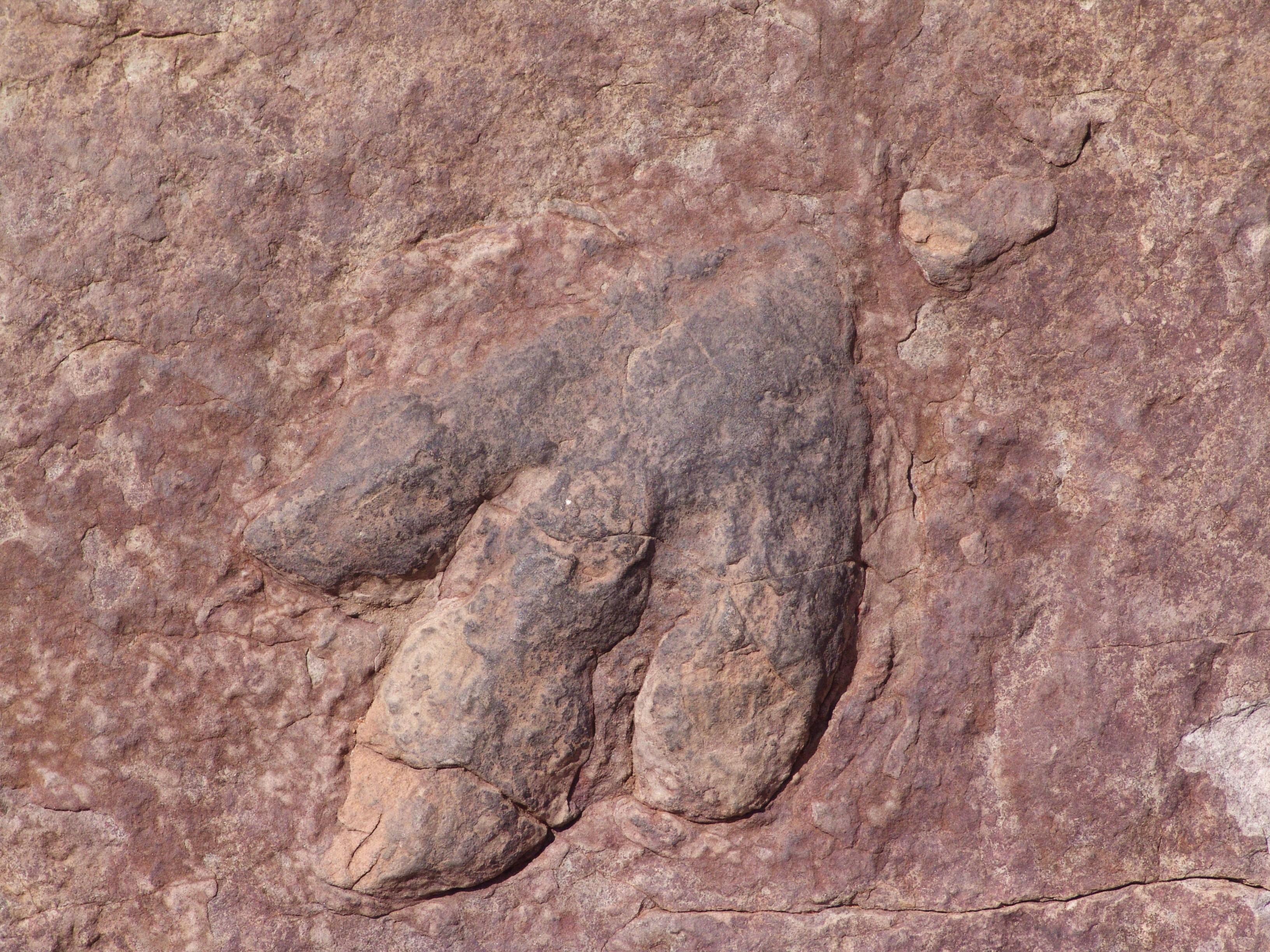 Kaya resimleri