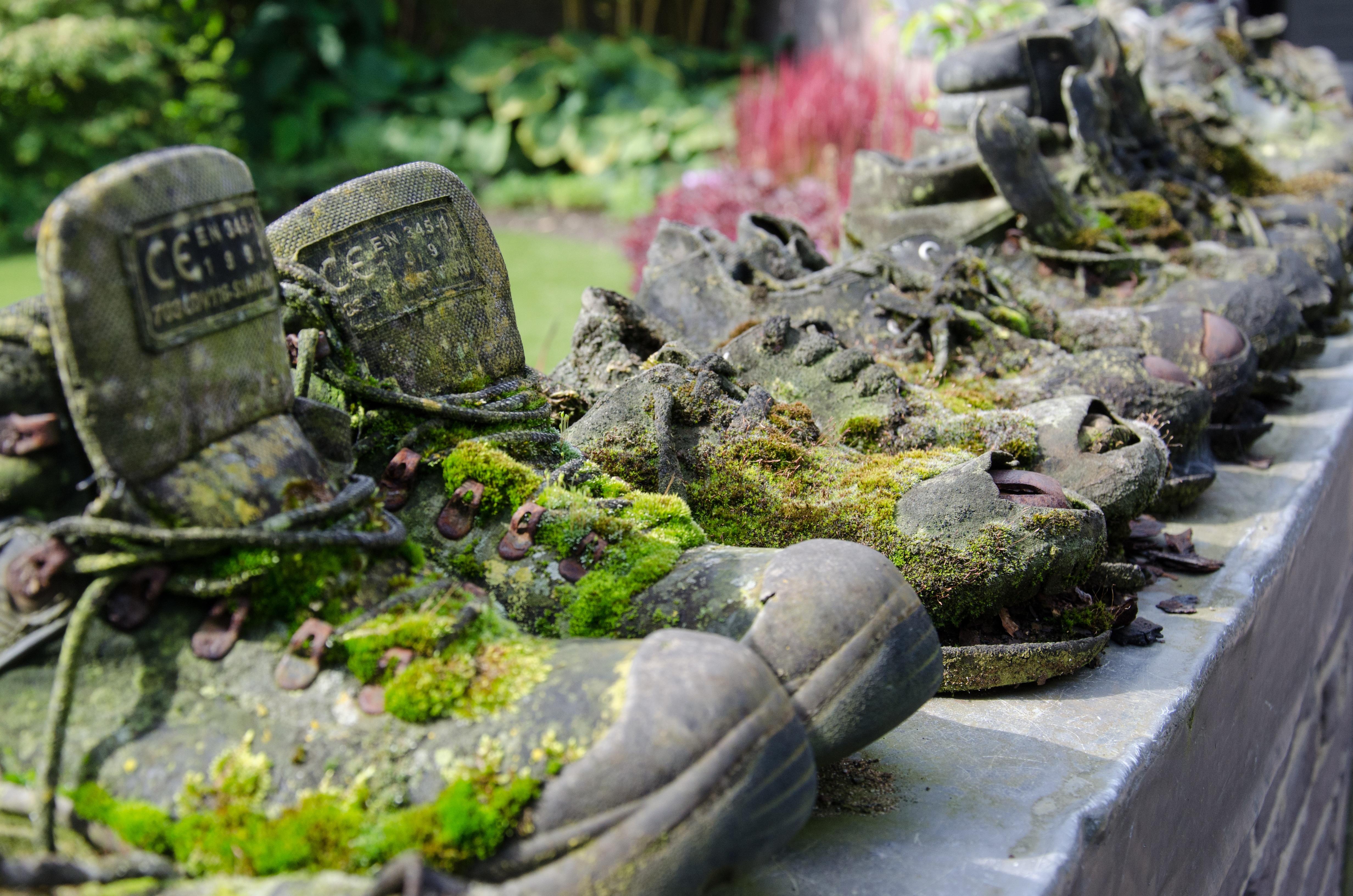4e2f19fabc5354 rock plant flower moss garden walking shoes water feature appeltern work  shoes