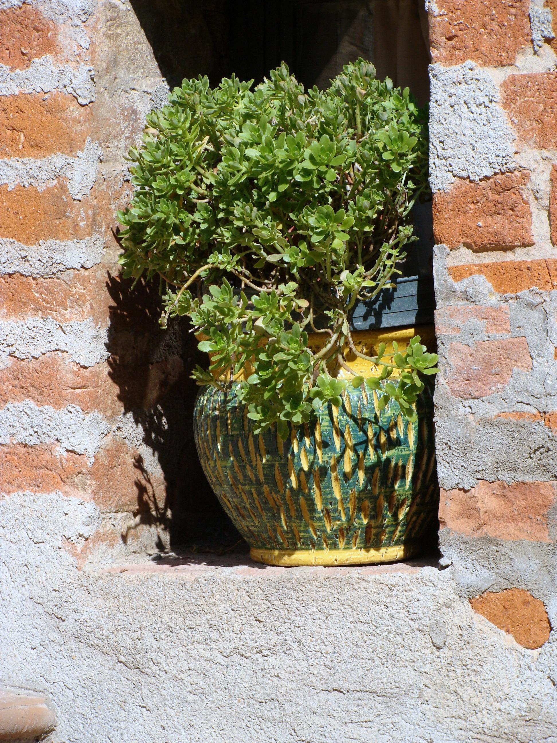 rock plant flower wall pot green red ceramic soil italy garden brick brick wall art bricks flowerpot pots niche