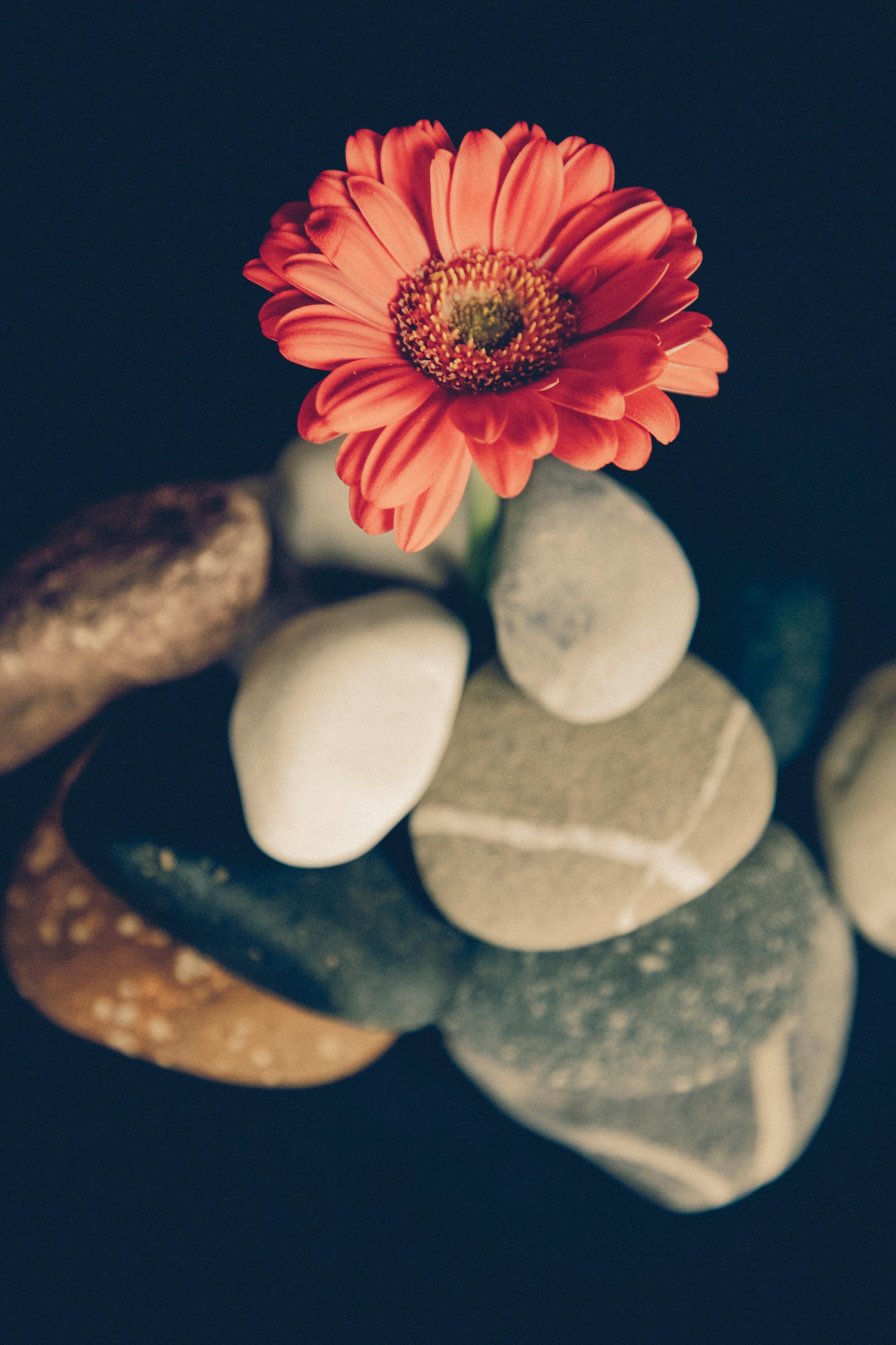 Камень цветок картинки