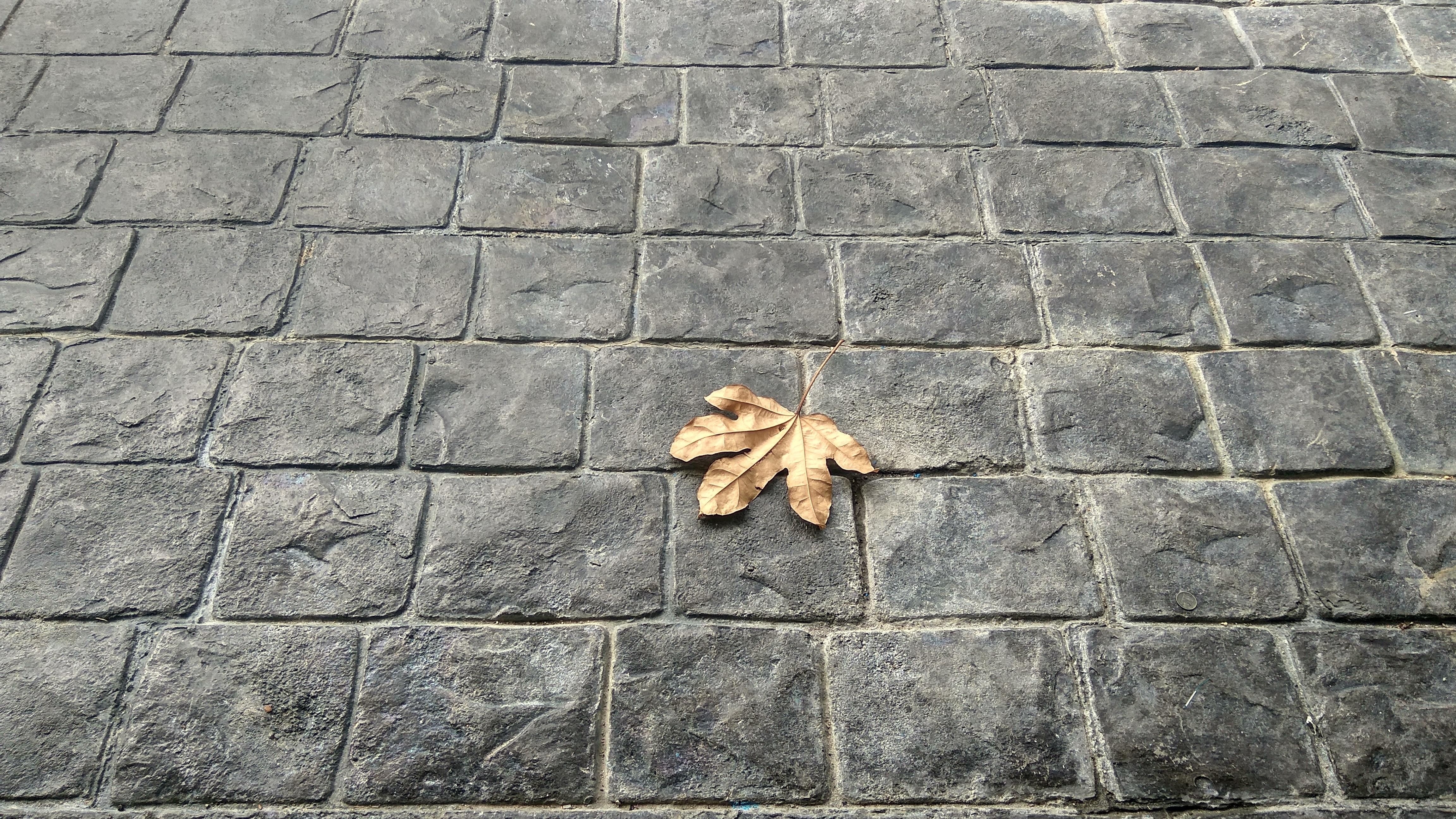 無料画像 岩 歩道 石畳 壁 アスファルト 土壌 タイル 石垣 レンガ 材料 葉 アート