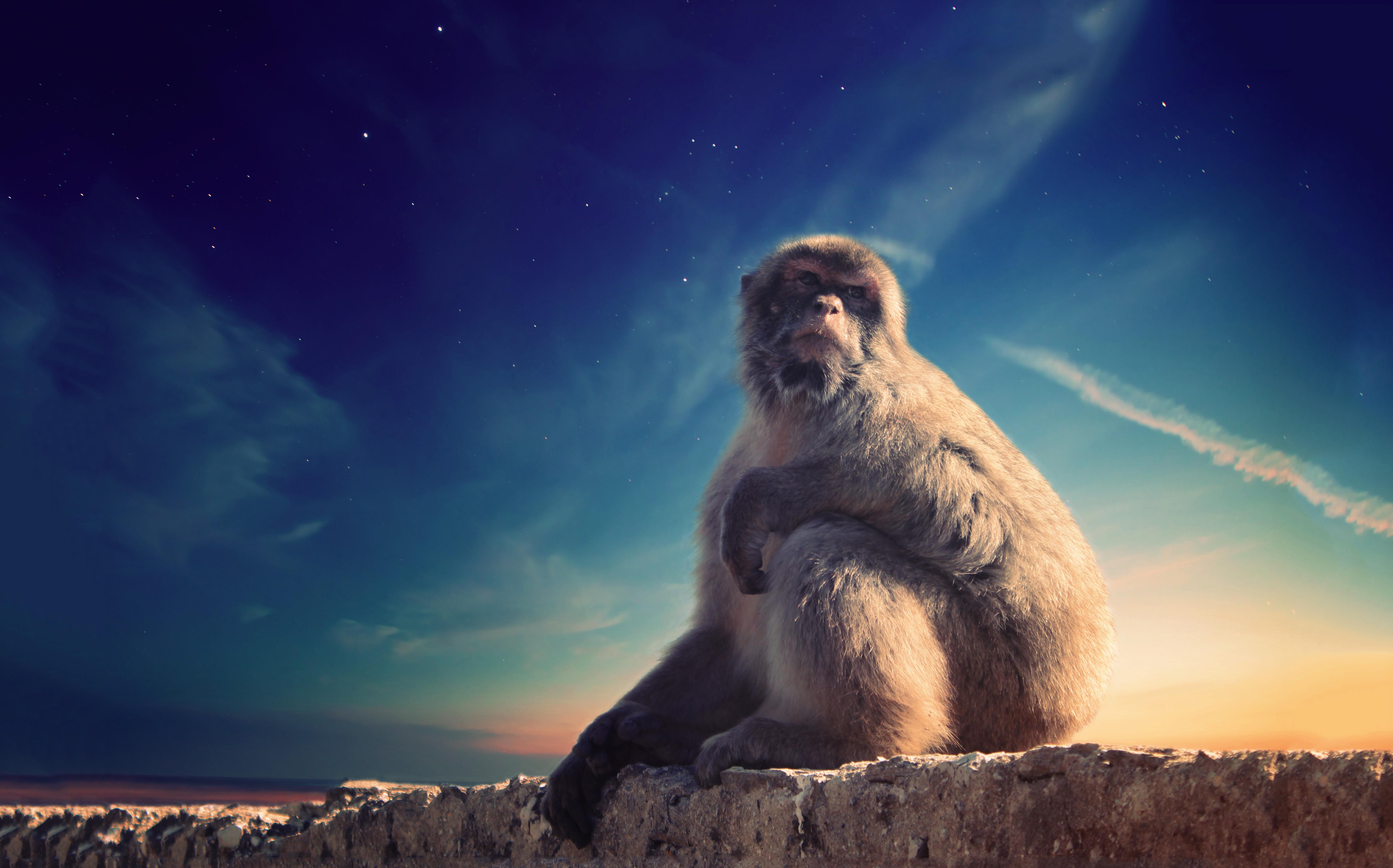 Hình Ảnh : Đá, Bầu Trời, Thú Vật, Động Vật Hoang Dã, Con Khỉ, Ngoài Trời,  Hình Nền Máy Tính 6106x3808