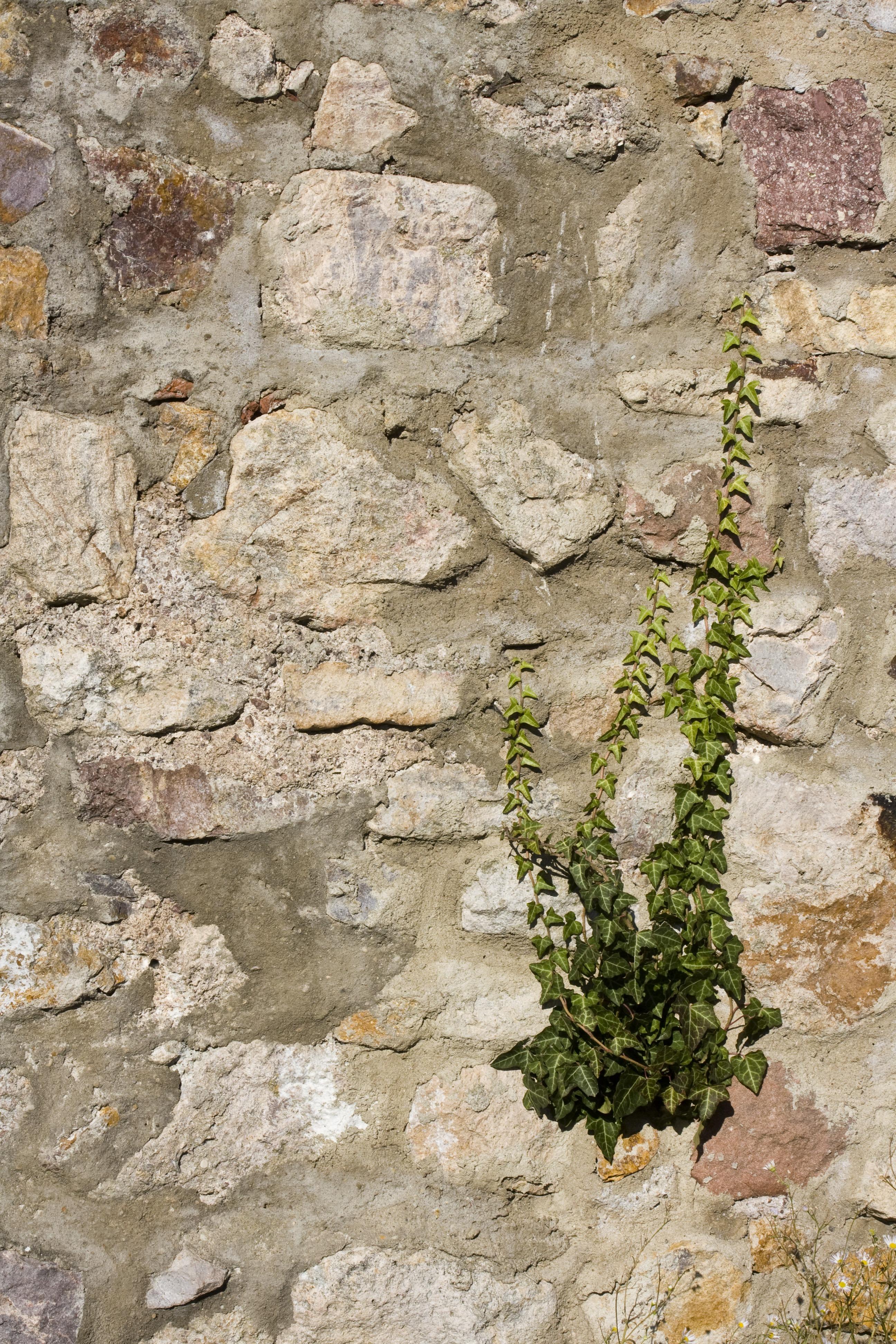 Kostenlose foto rock struktur textur blume for Boden ziegel
